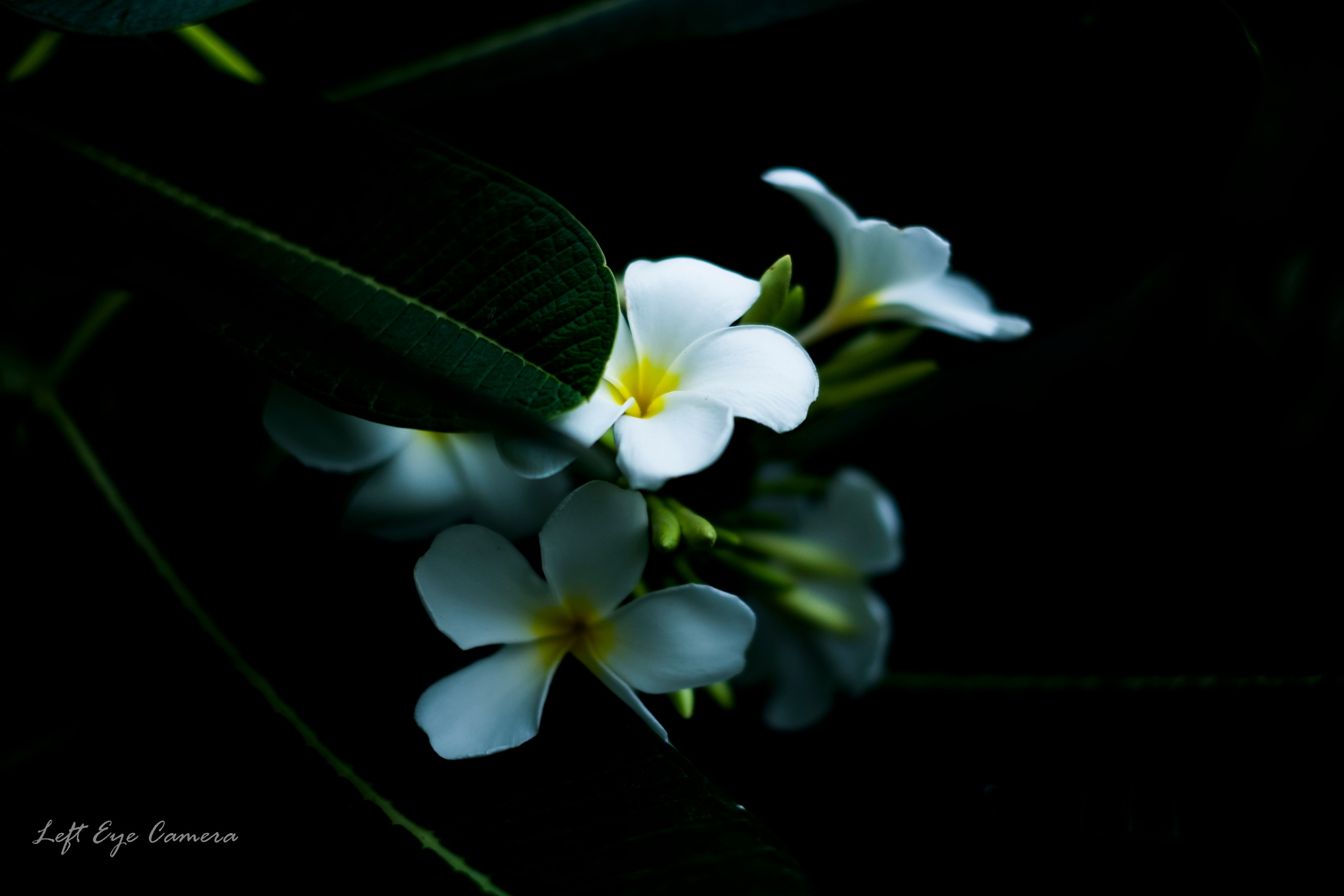 no rain no flowers by Chairat Buntaotook