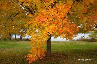 Fall colors by Carrie Winter