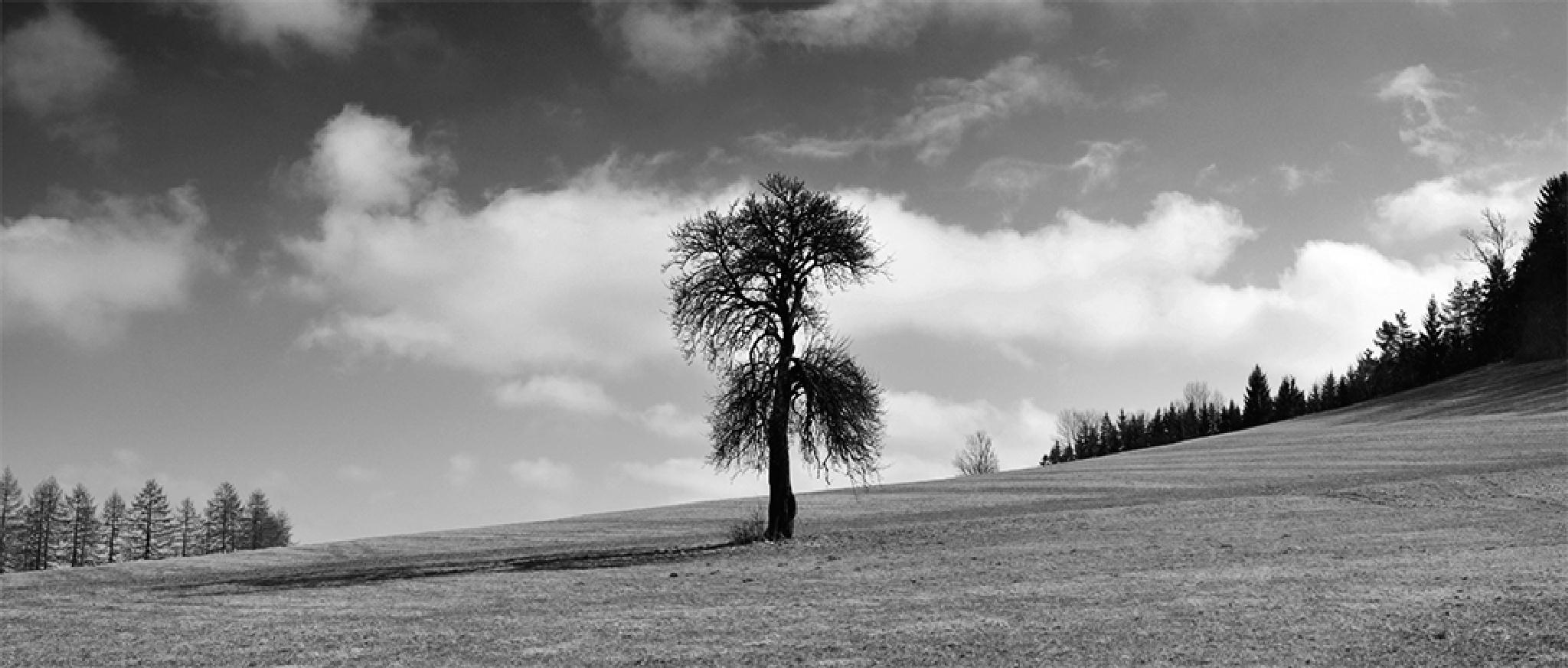 landscape by Lalowski von Nasa
