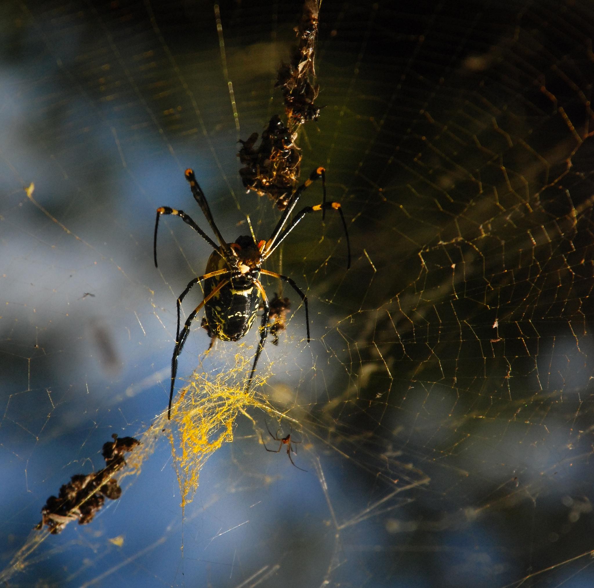 Web by Frans van Heerden