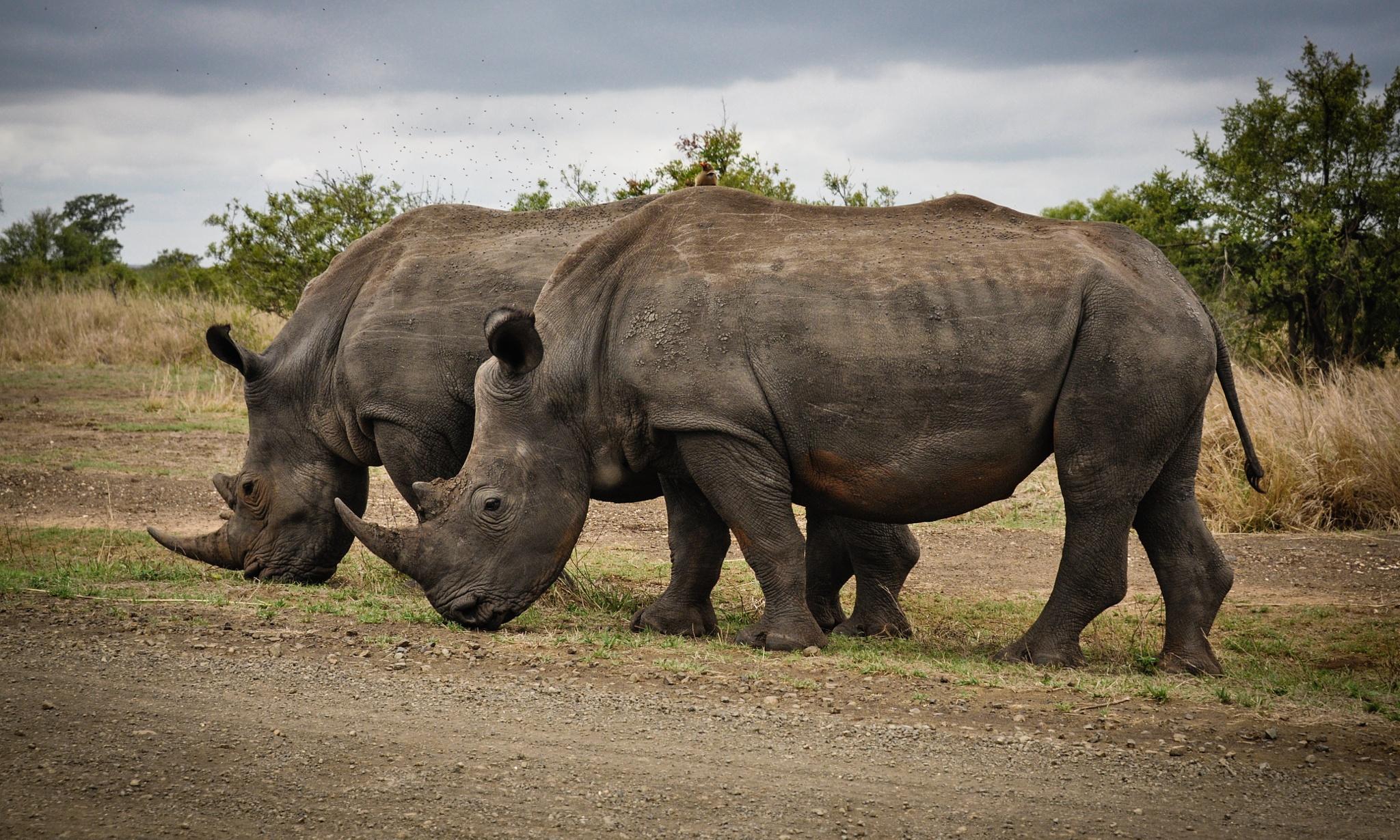 Endangered by Frans van Heerden