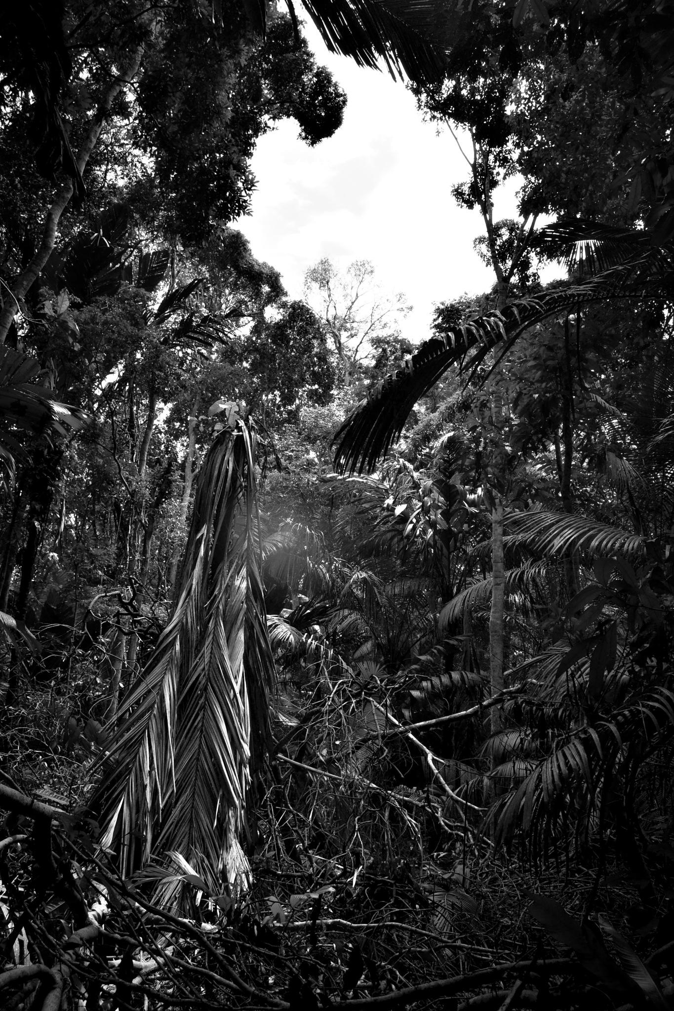 Amazon rainfores by Dayse Ferreira