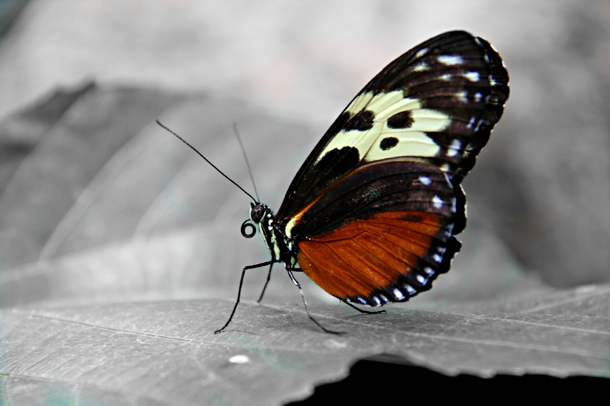 Colour Splash Butterfly (2) by Steven Bonk