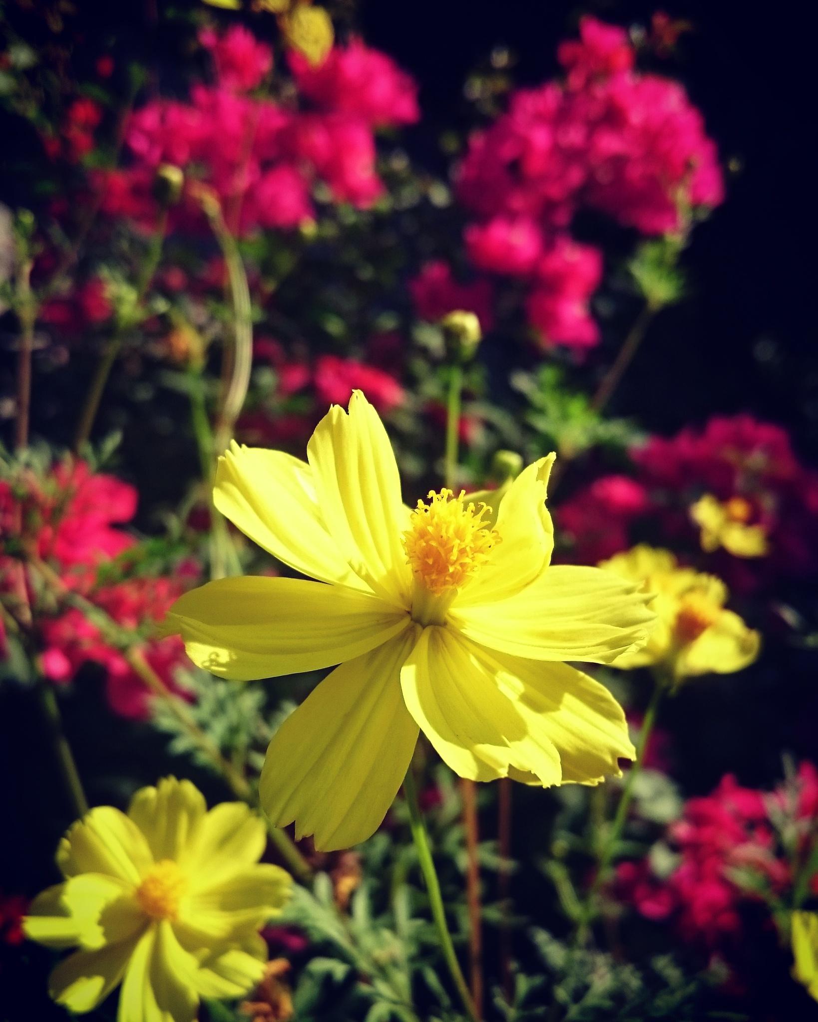 blooms by Ohwan (amateur)