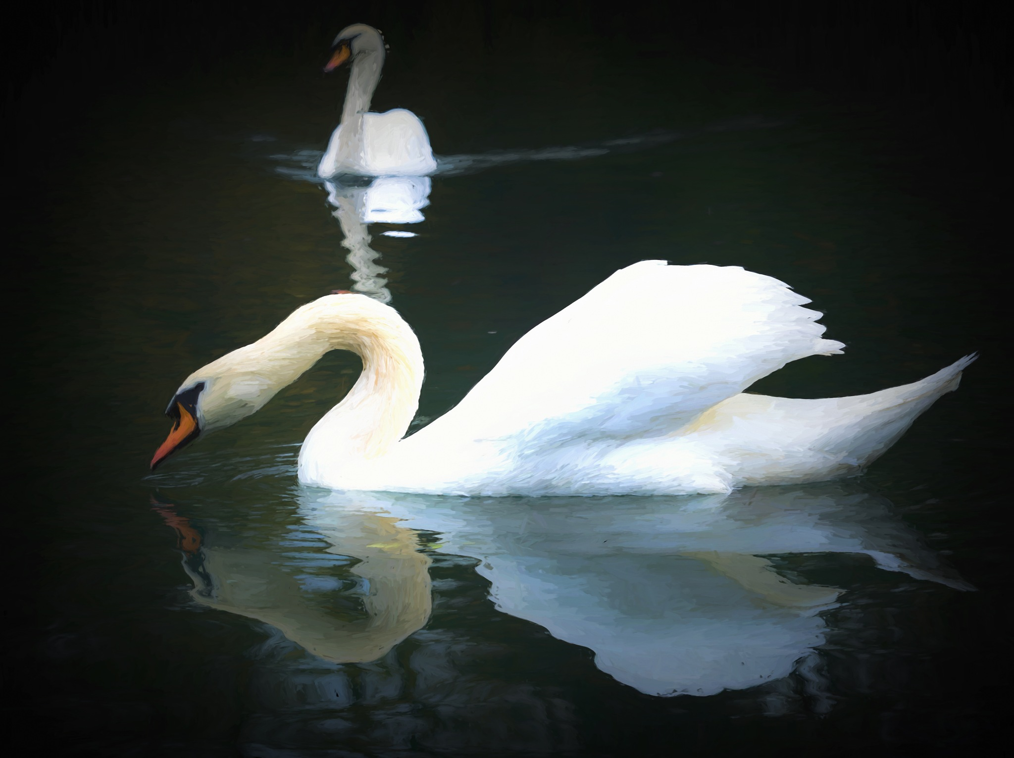 Mute Swans by Sarah Walters