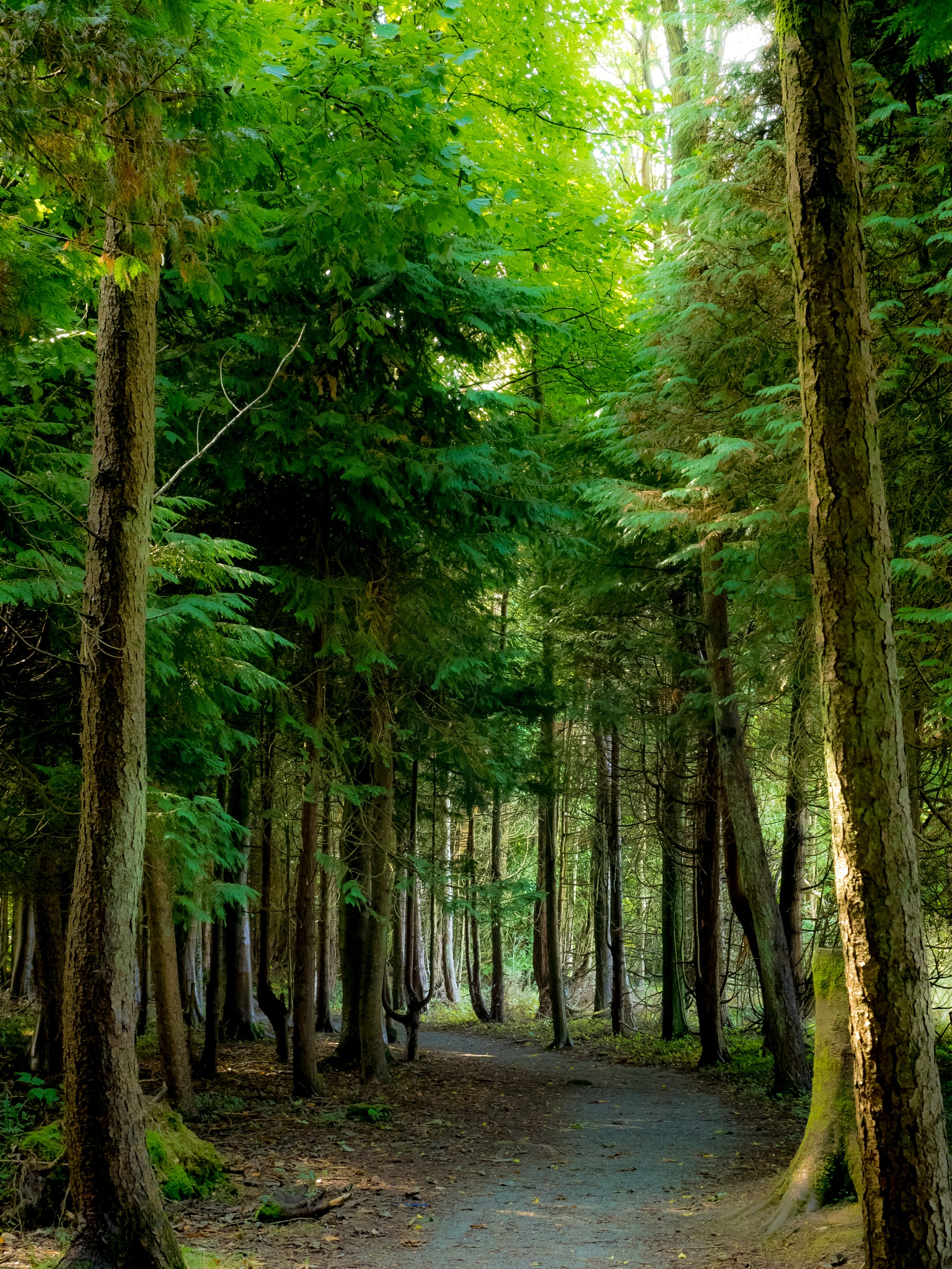 Path Through the Trees 2 by Sarah Walters