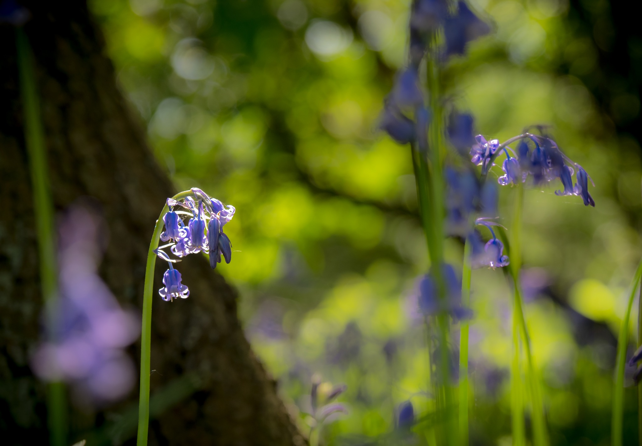 Sparkling in the Sunshine by Sarah Walters