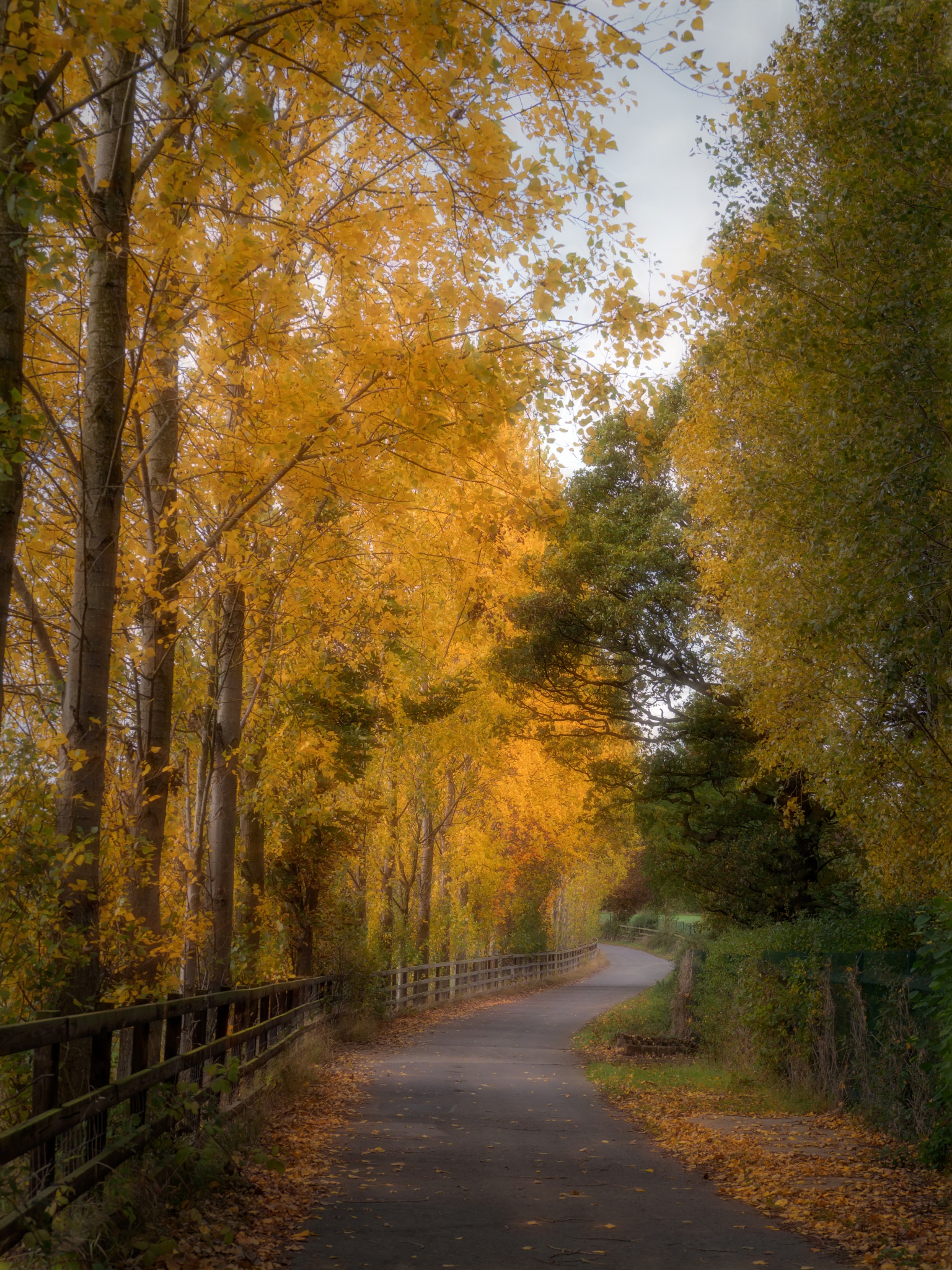Tree-Lined Path 3 by Sarah Walters