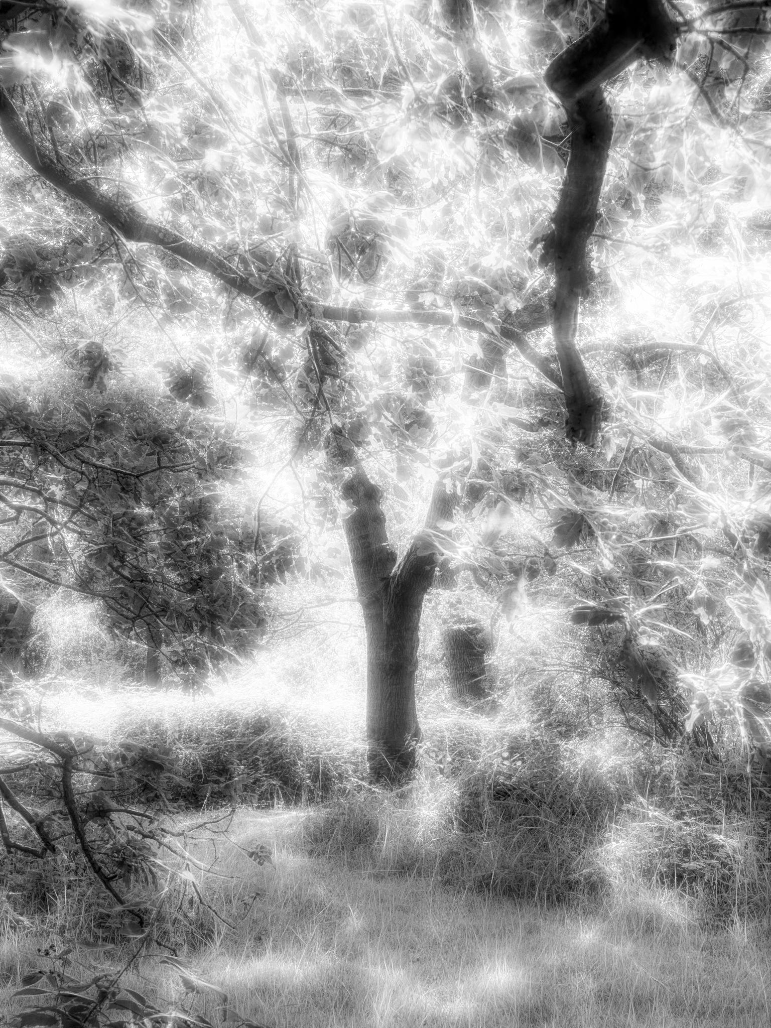 Fantasy Tree by Sarah Walters
