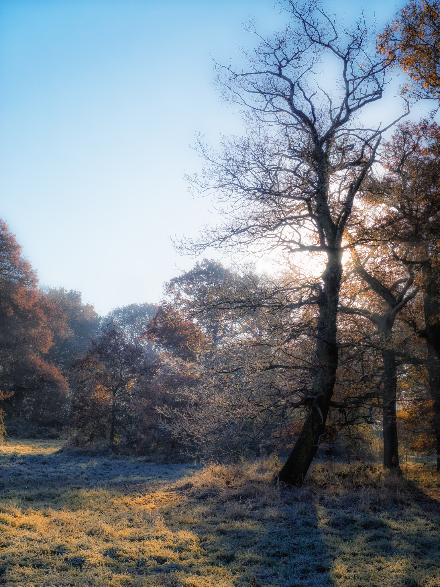 Frosty Tres in the Clearing by Sarah Walters
