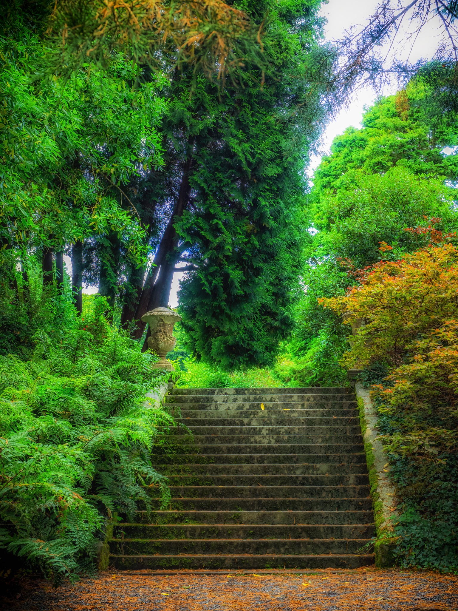 The Steps by Sarah Walters