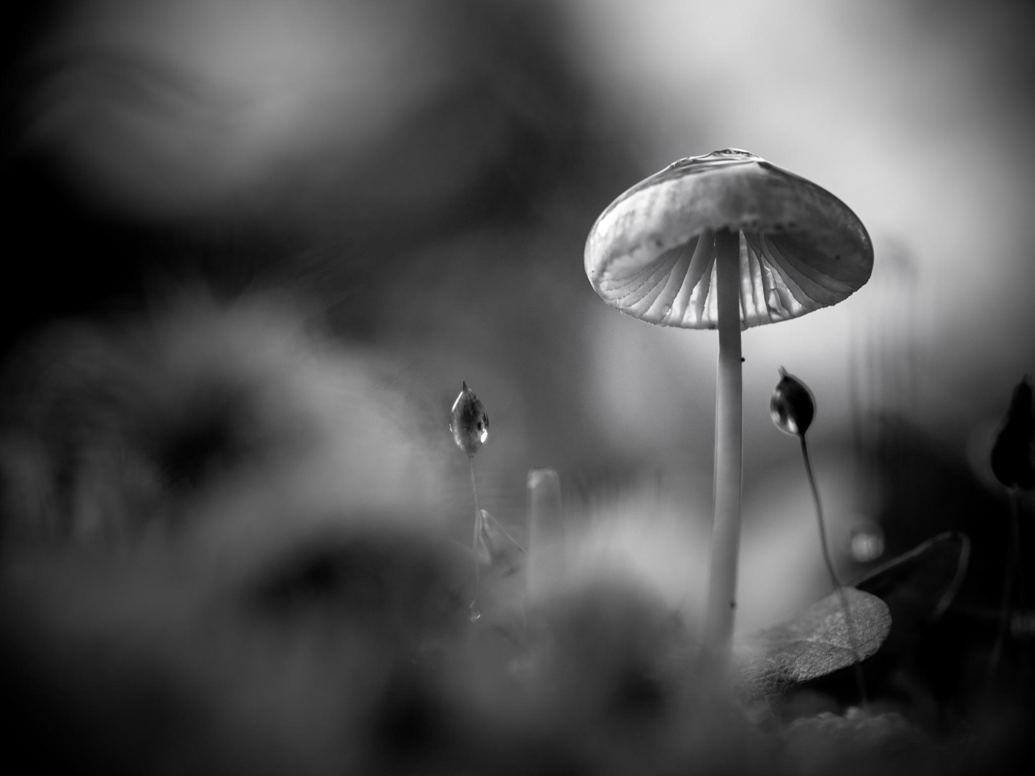 Mono fungi again by Sarah Walters