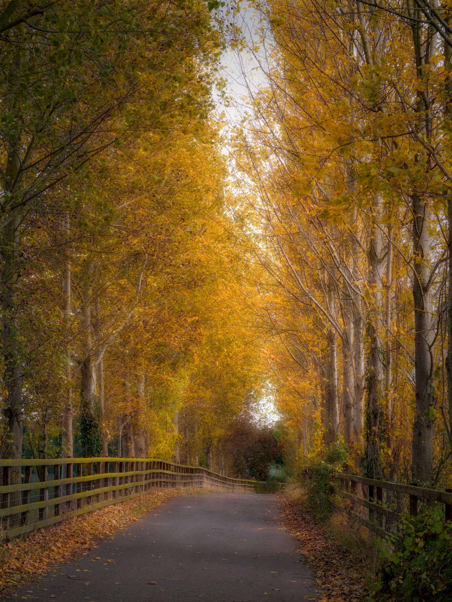 Tree-Lined Path by Sarah Walters