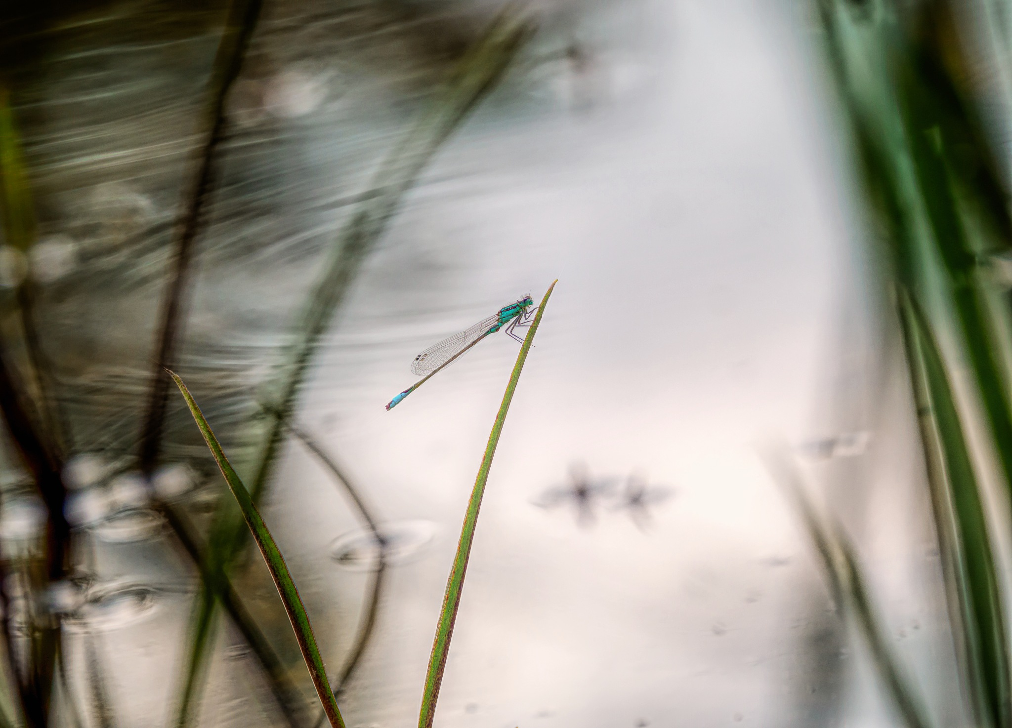 Just one damselfly by Sarah Walters