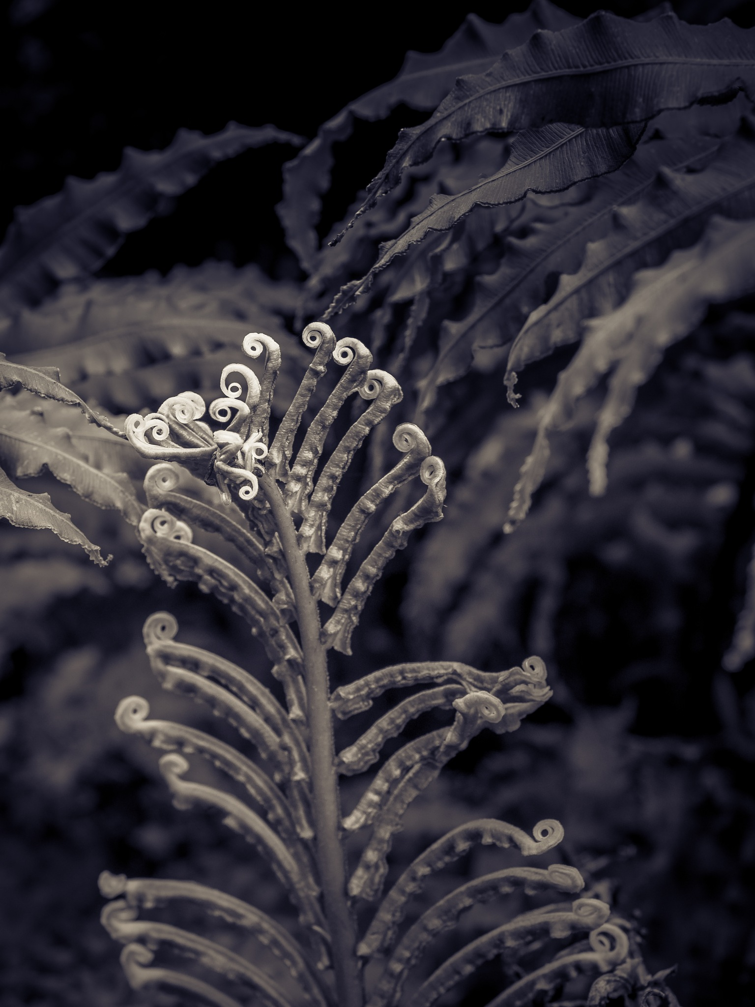Unfurling Fronds by Sarah Walters