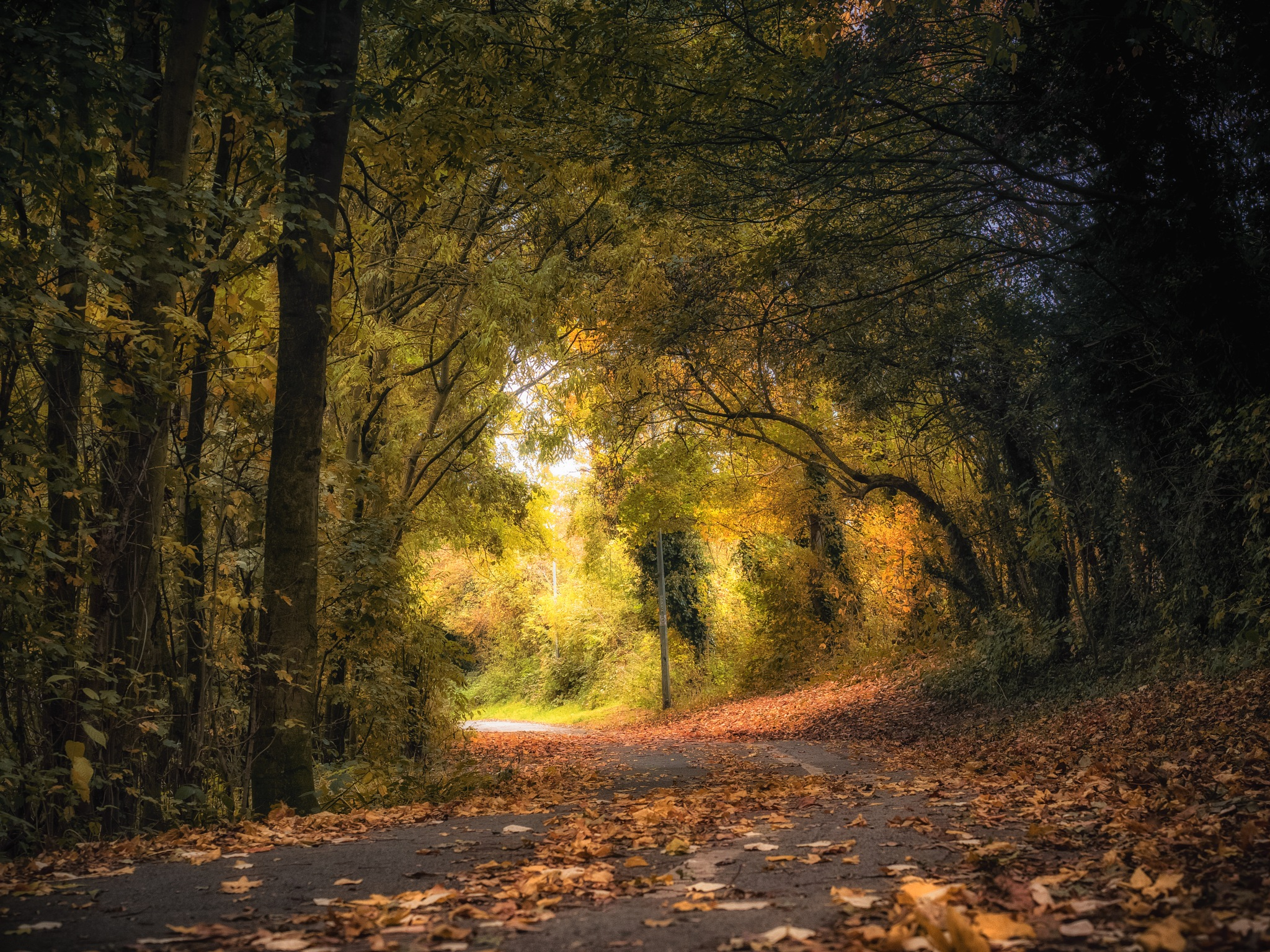 Autumn Path by Sarah Walters