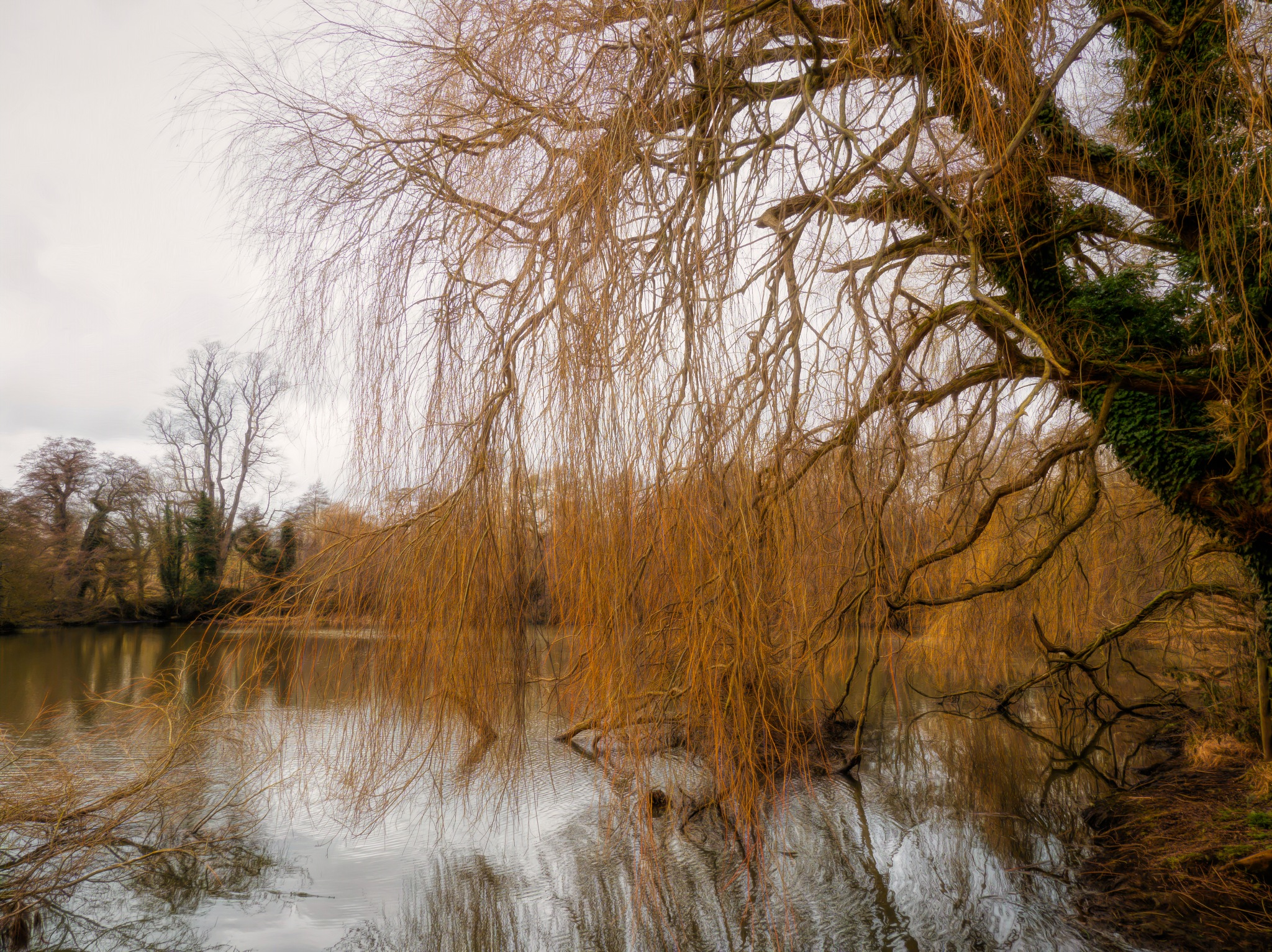Weeping Willow by Sarah Walters