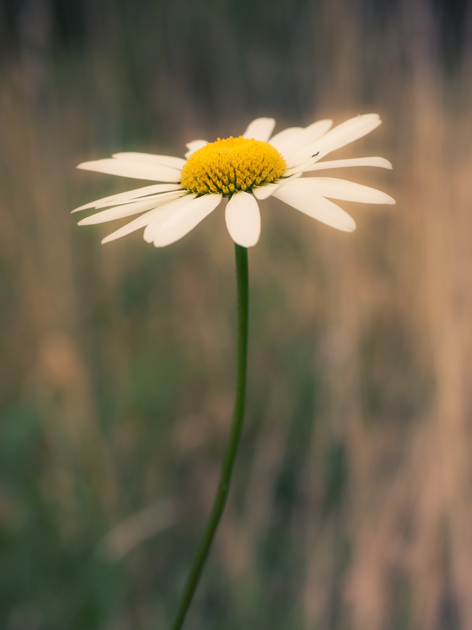 Still Summer in the Meadows by Sarah Walters