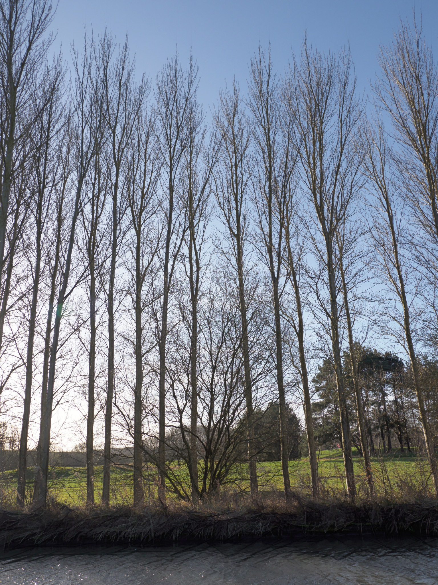 Poplars and Hawthorn by Sarah Walters