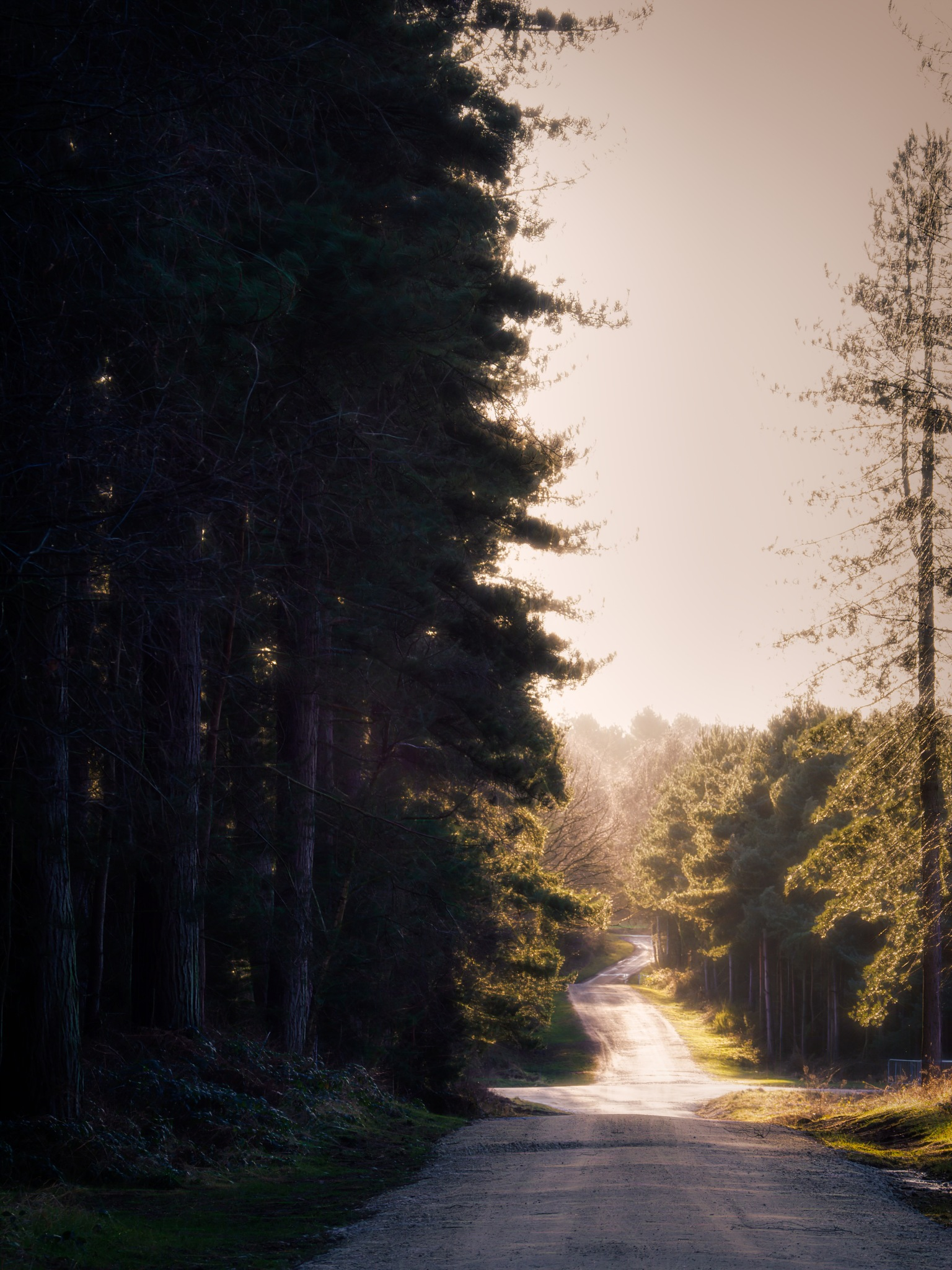 Evening Road 2 by Sarah Walters