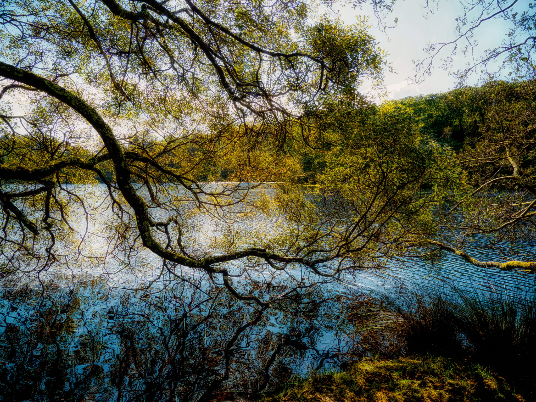Lake through the Trees 2 by Sarah Walters