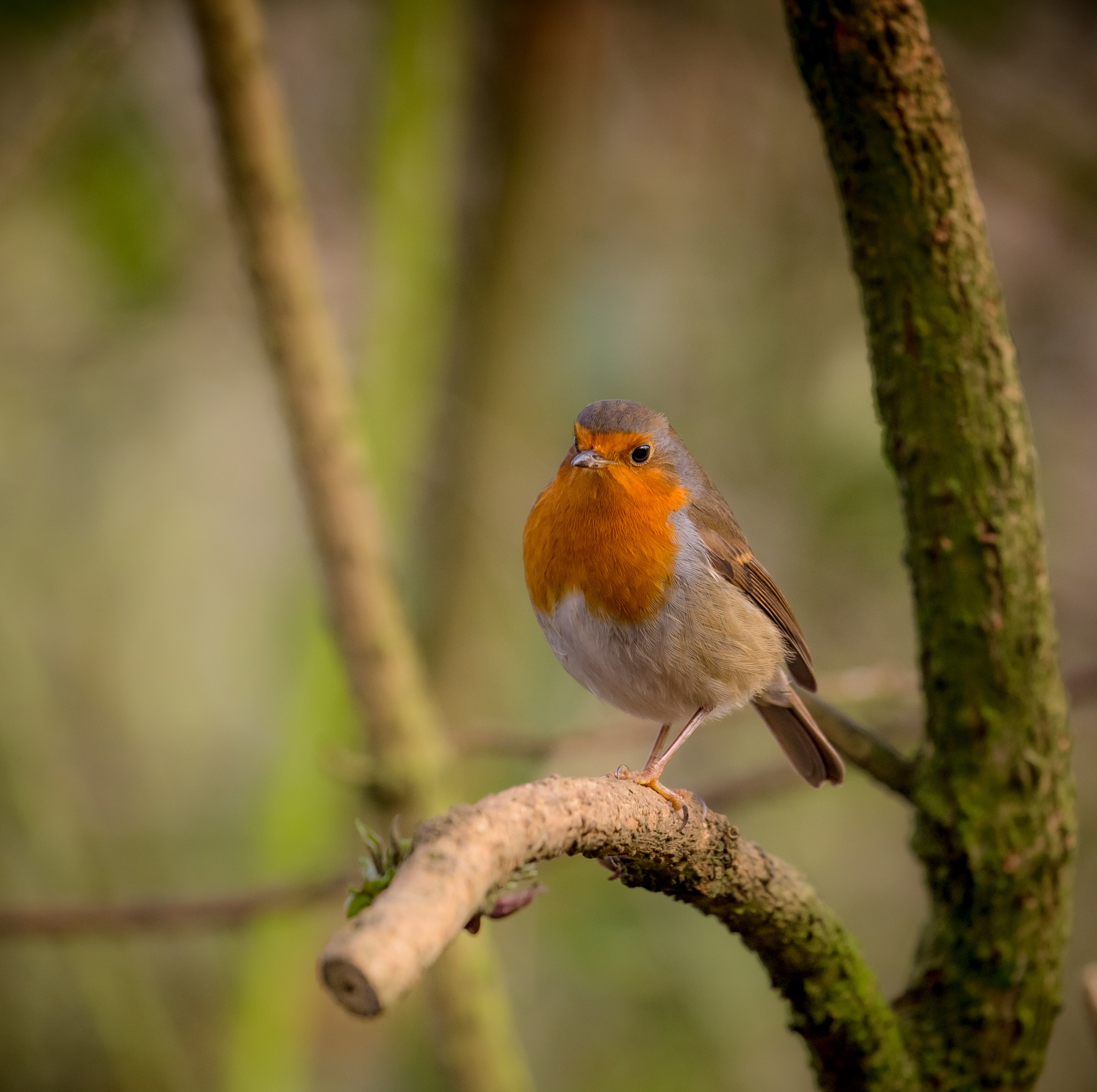 Robin by Sarah Walters