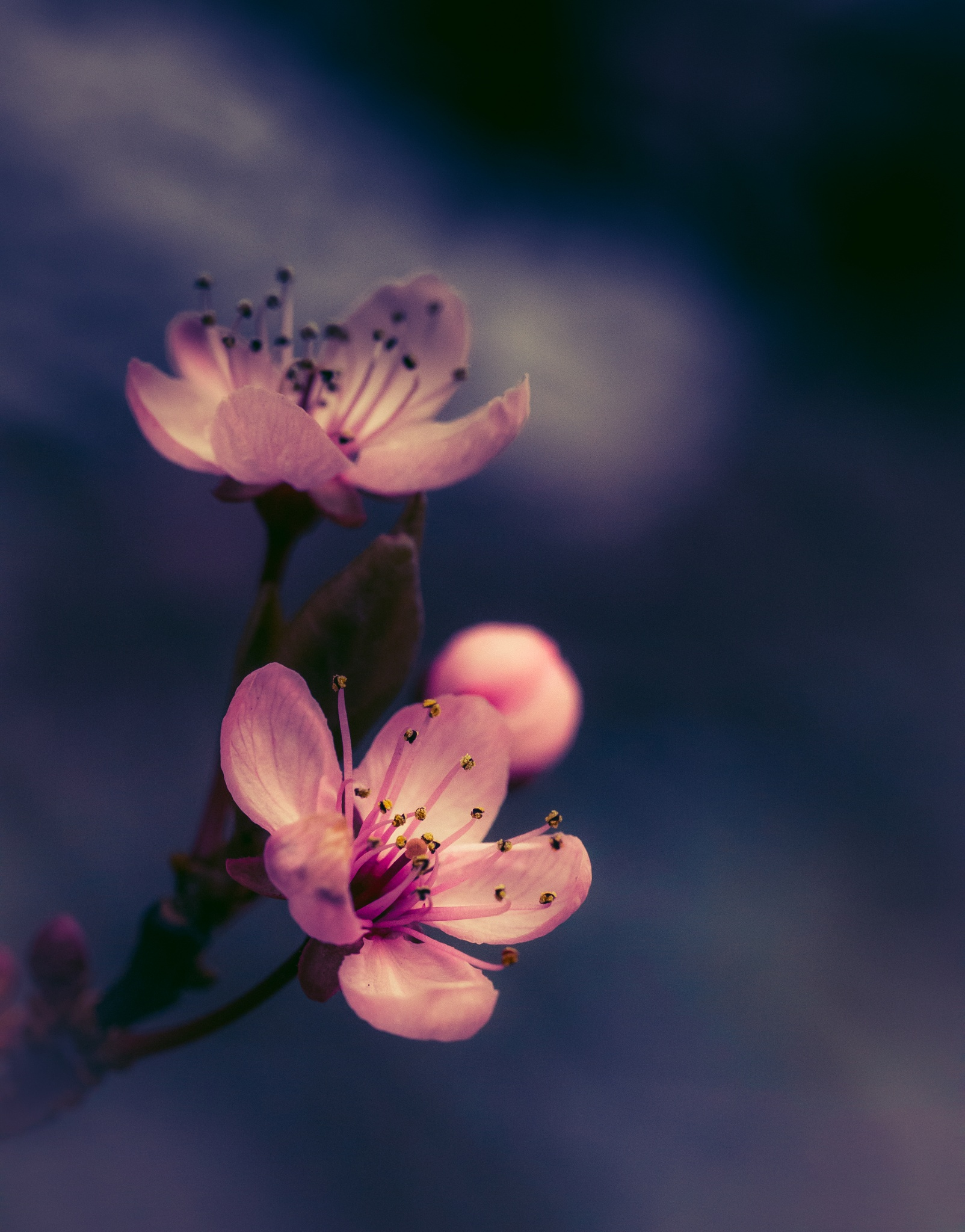 More blossom by Sarah Walters