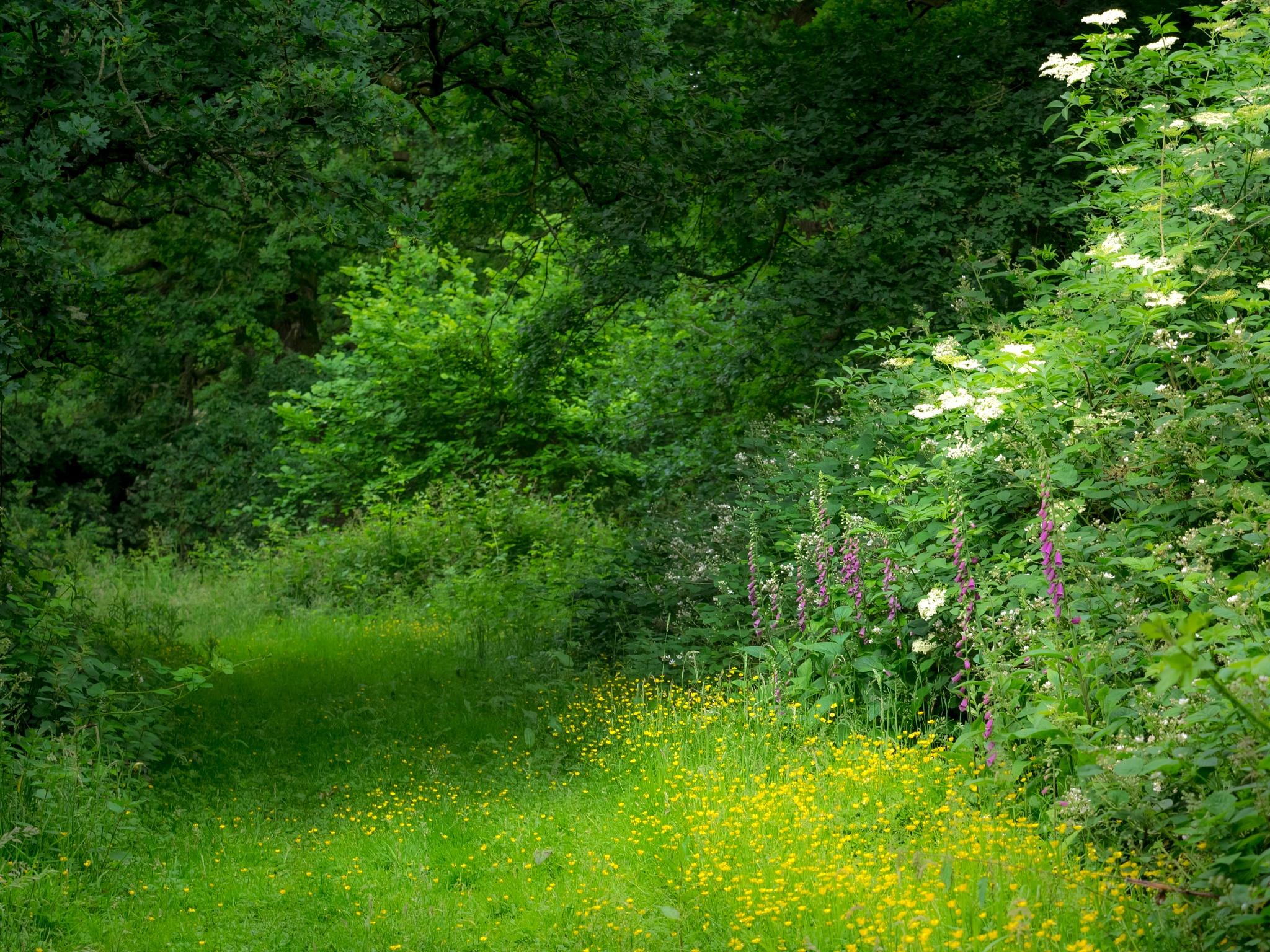 Woodland edge by Sarah Walters