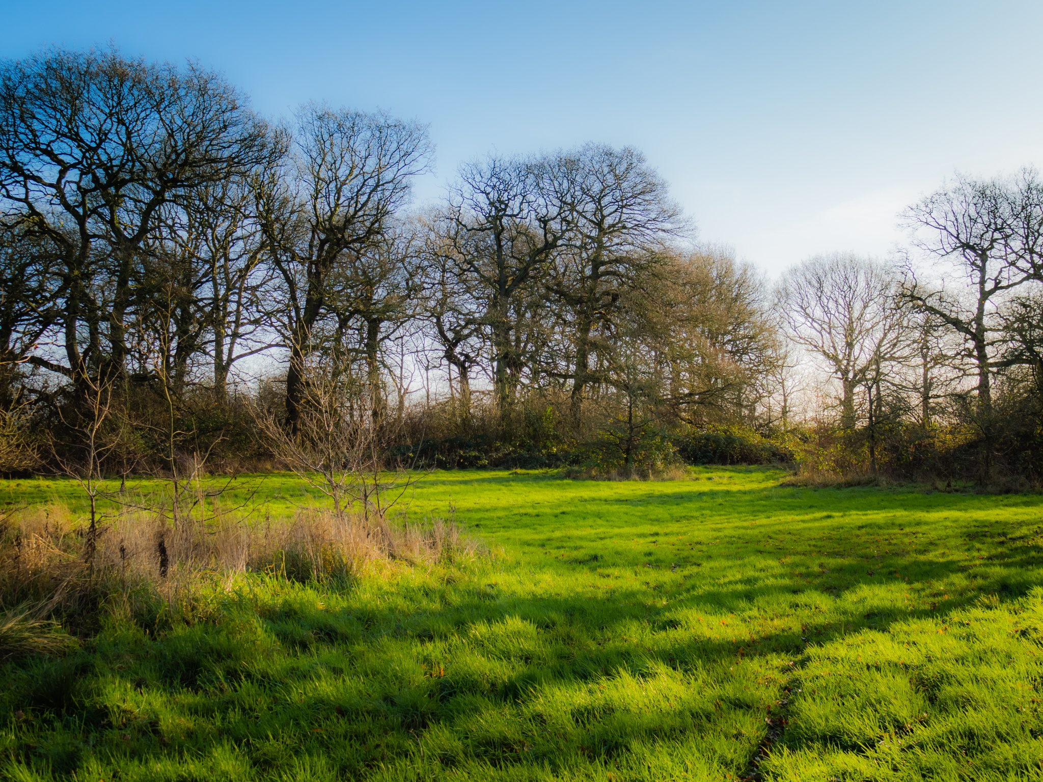 Winter Sun in our Clearing by Sarah Walters