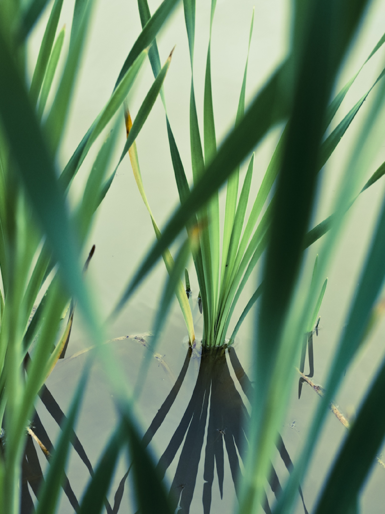 Sedges by Sarah Walters