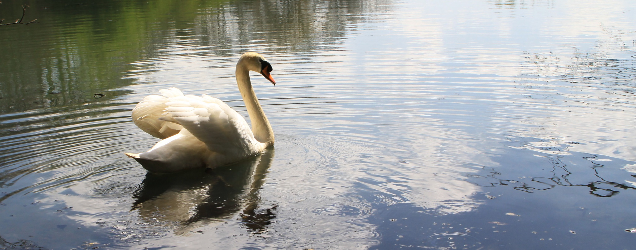 Swan Lake by Sarah Walters