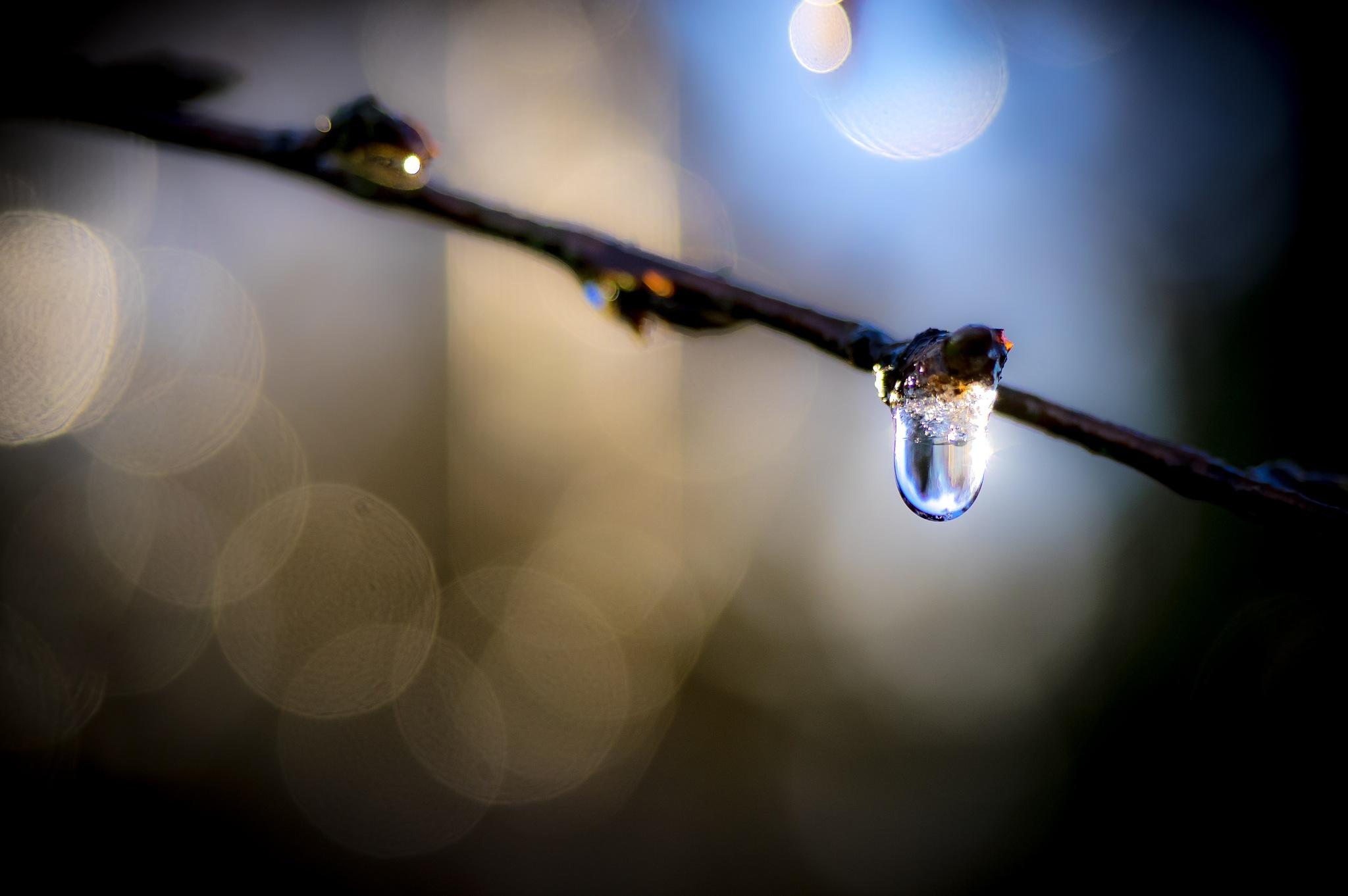 Drip Bokeh by Sarah Walters