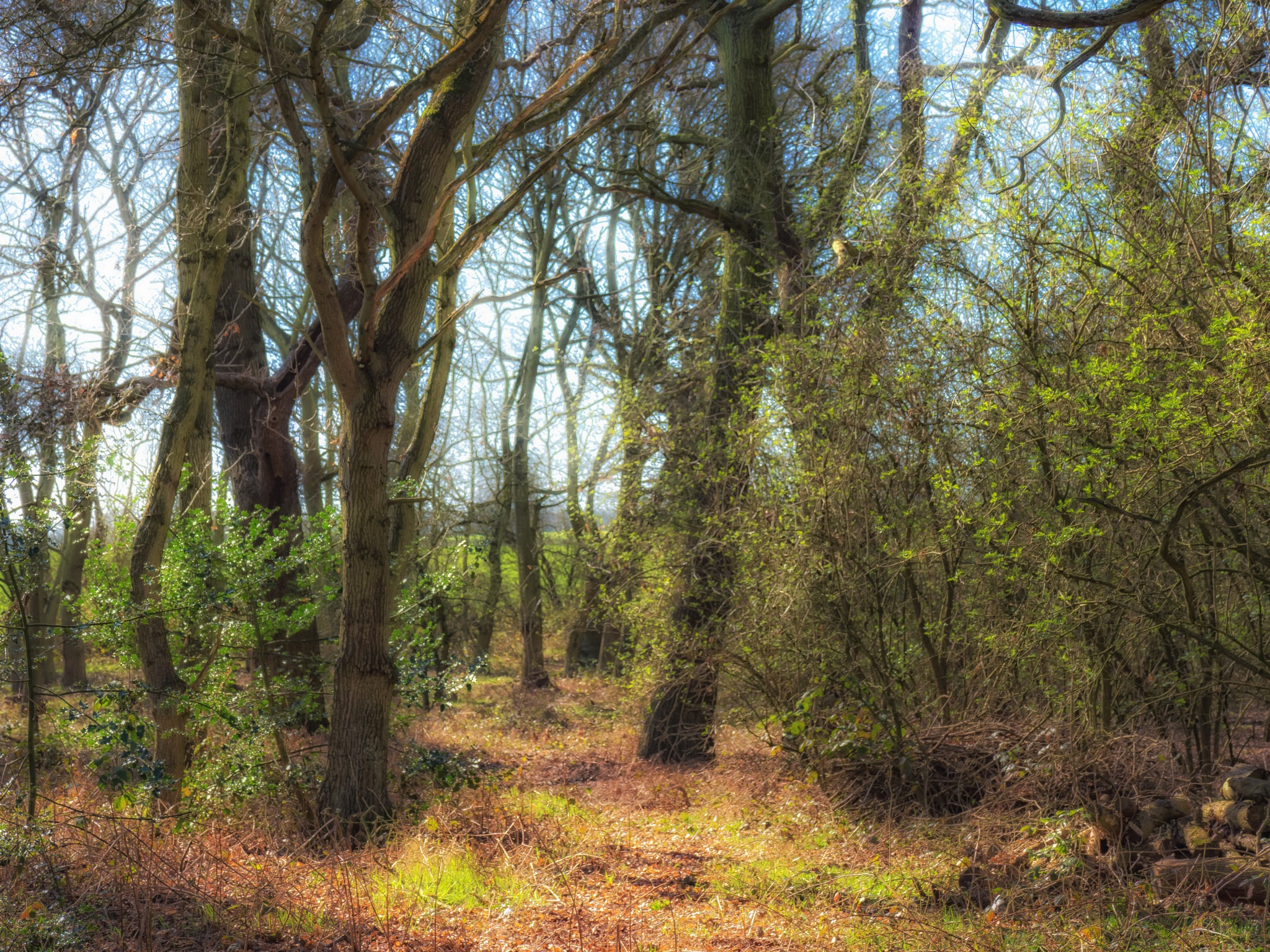 Green Tinge of Spring by Sarah Walters