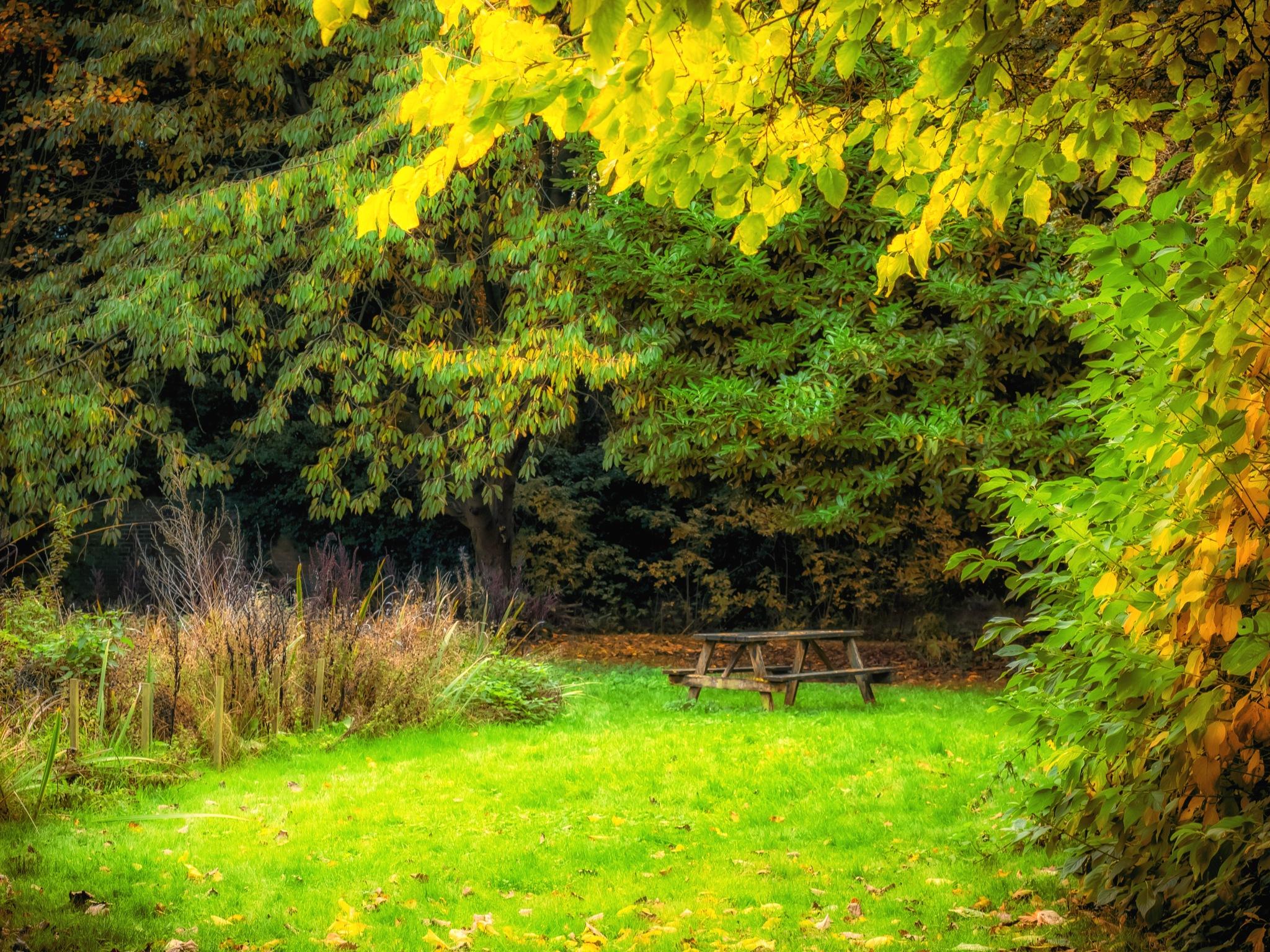 Splash of yellow 2 by Sarah Walters