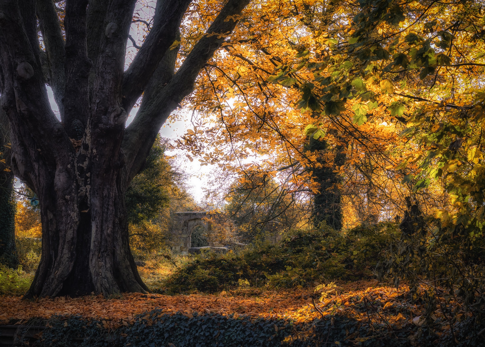Autumn Priory by Sarah Walters