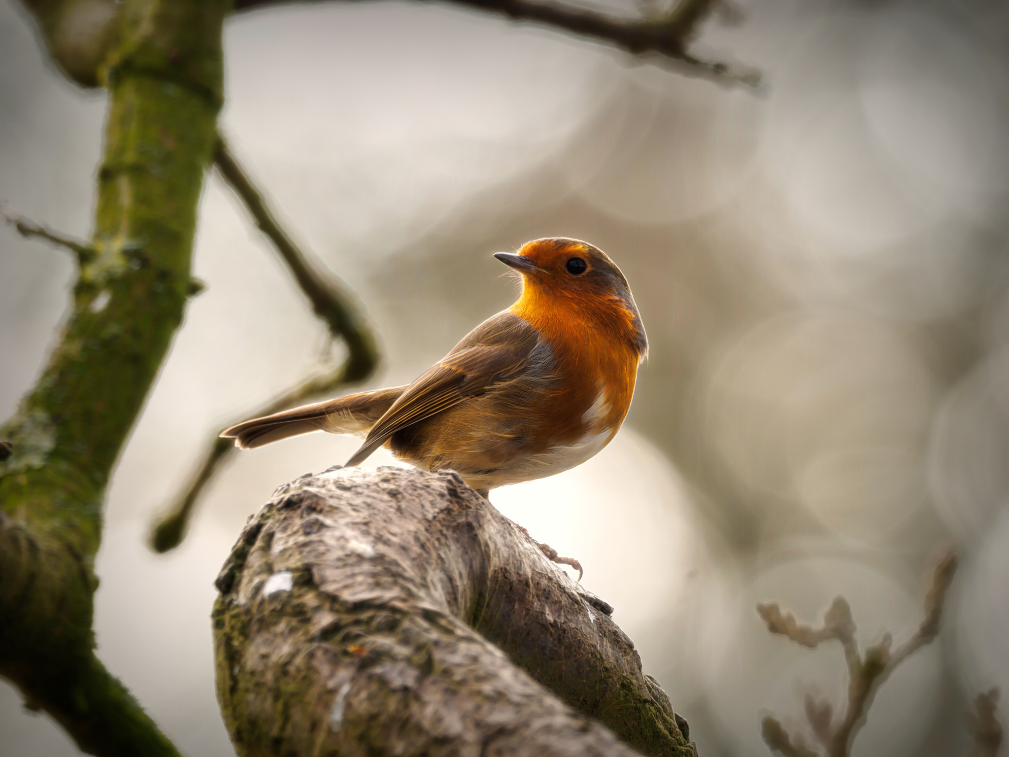 Robin 2 by Sarah Walters