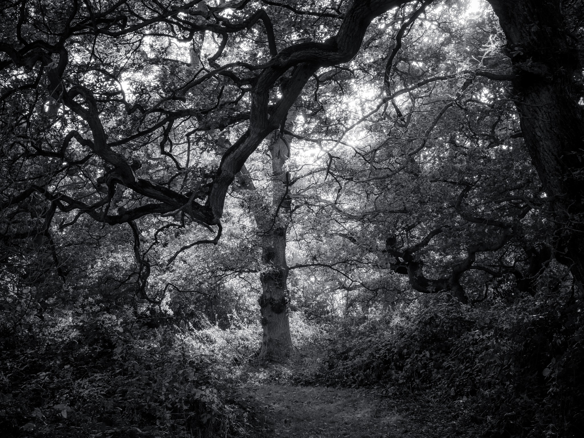 Dance of the Branches by Sarah Walters