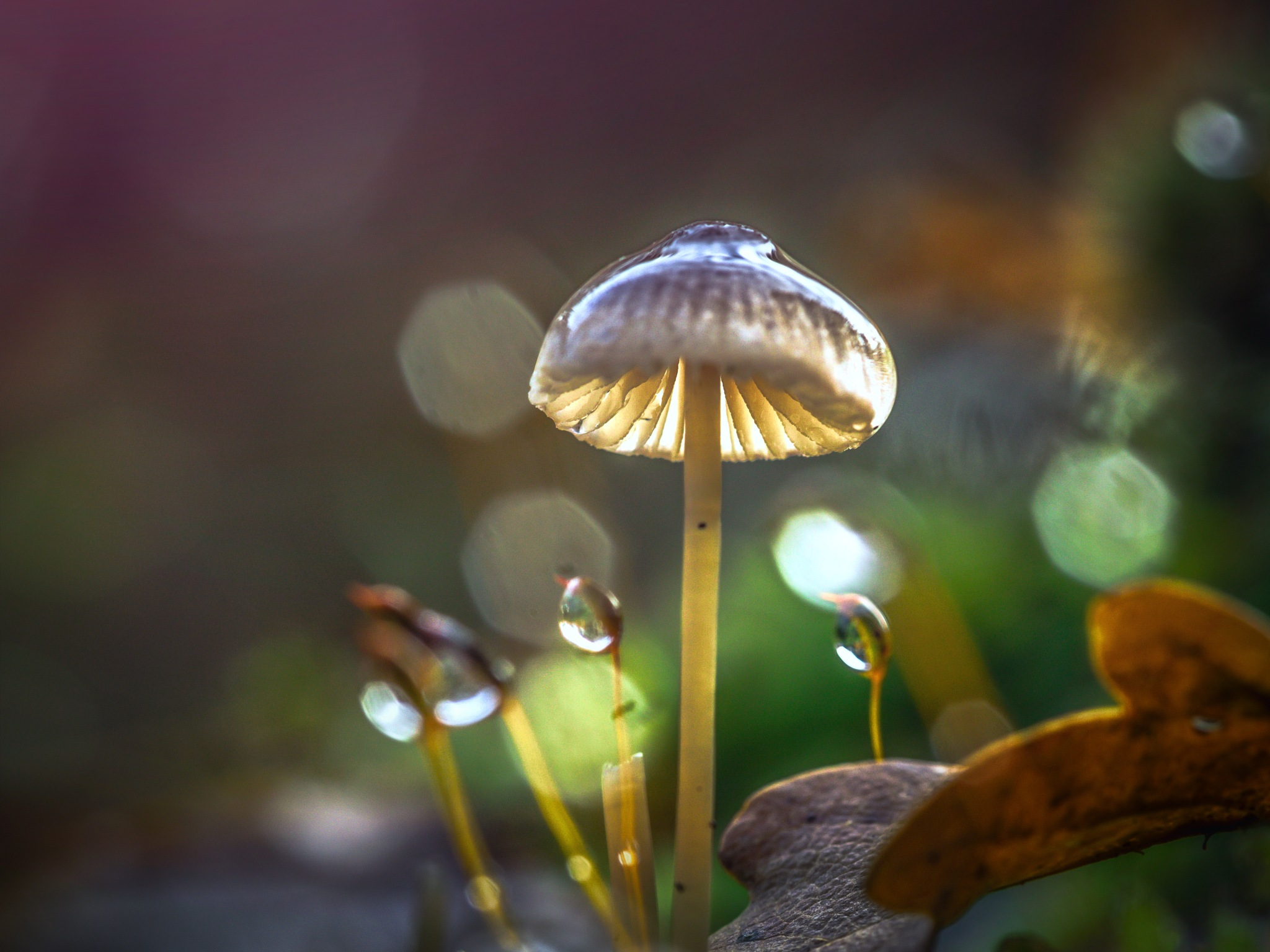 After the Rain by Sarah Walters