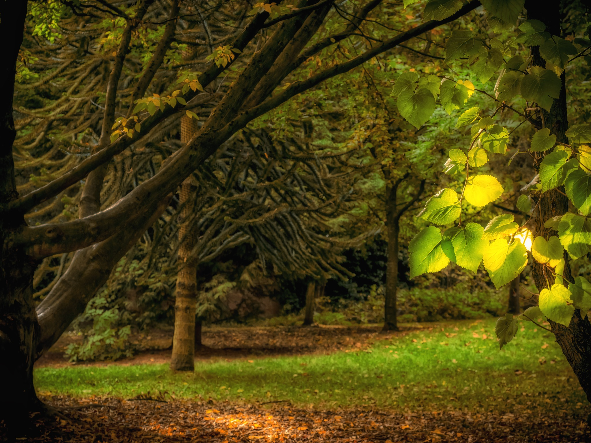 Bright leaves and dark spaces by Sarah Walters