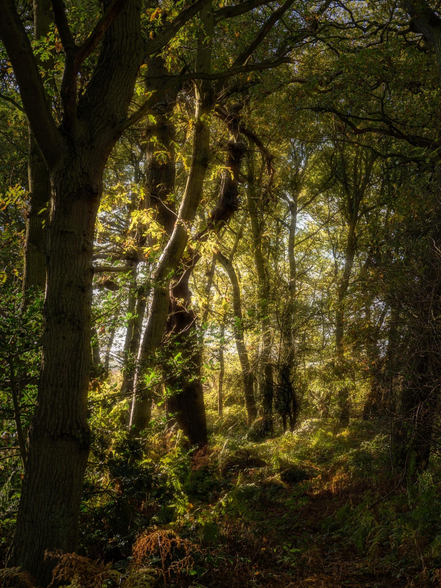Autumn Plantation by Sarah Walters