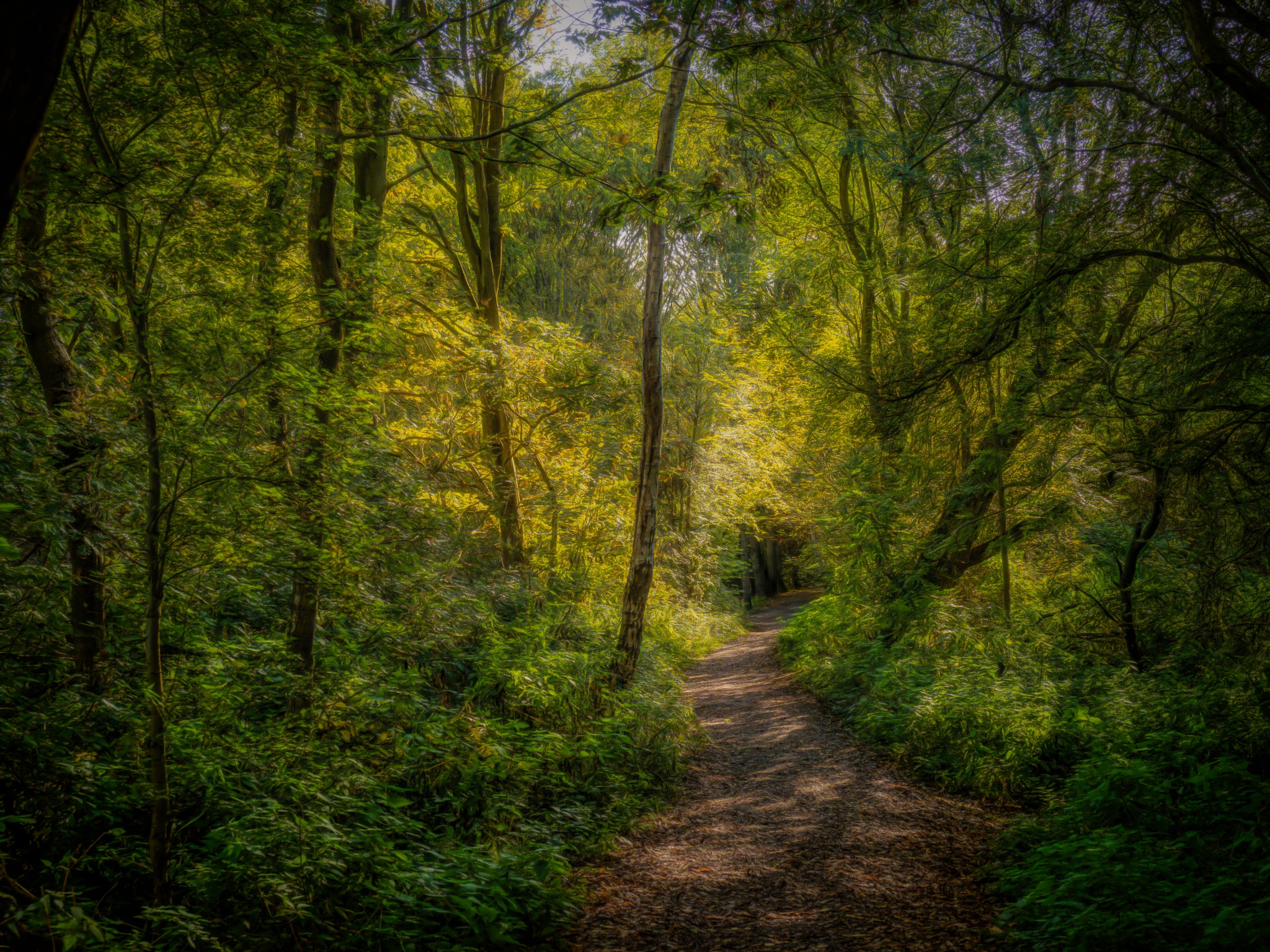 Gentle Woodland Morning by Sarah Walters