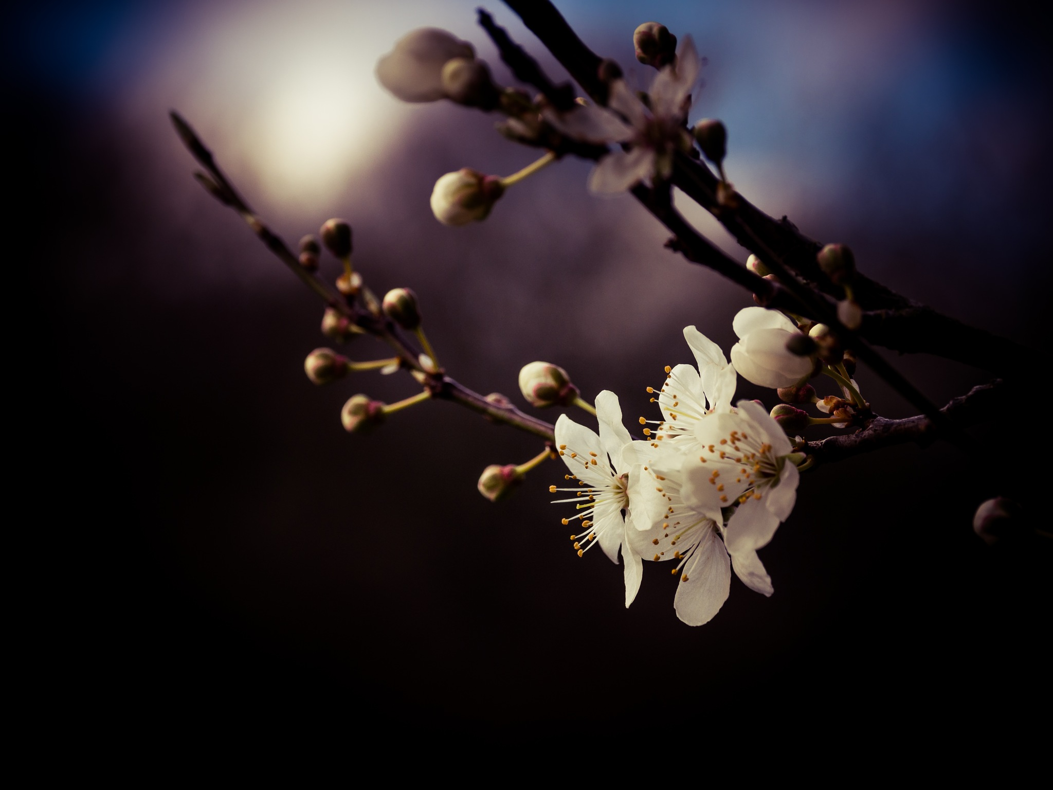 Blossom by Sarah Walters