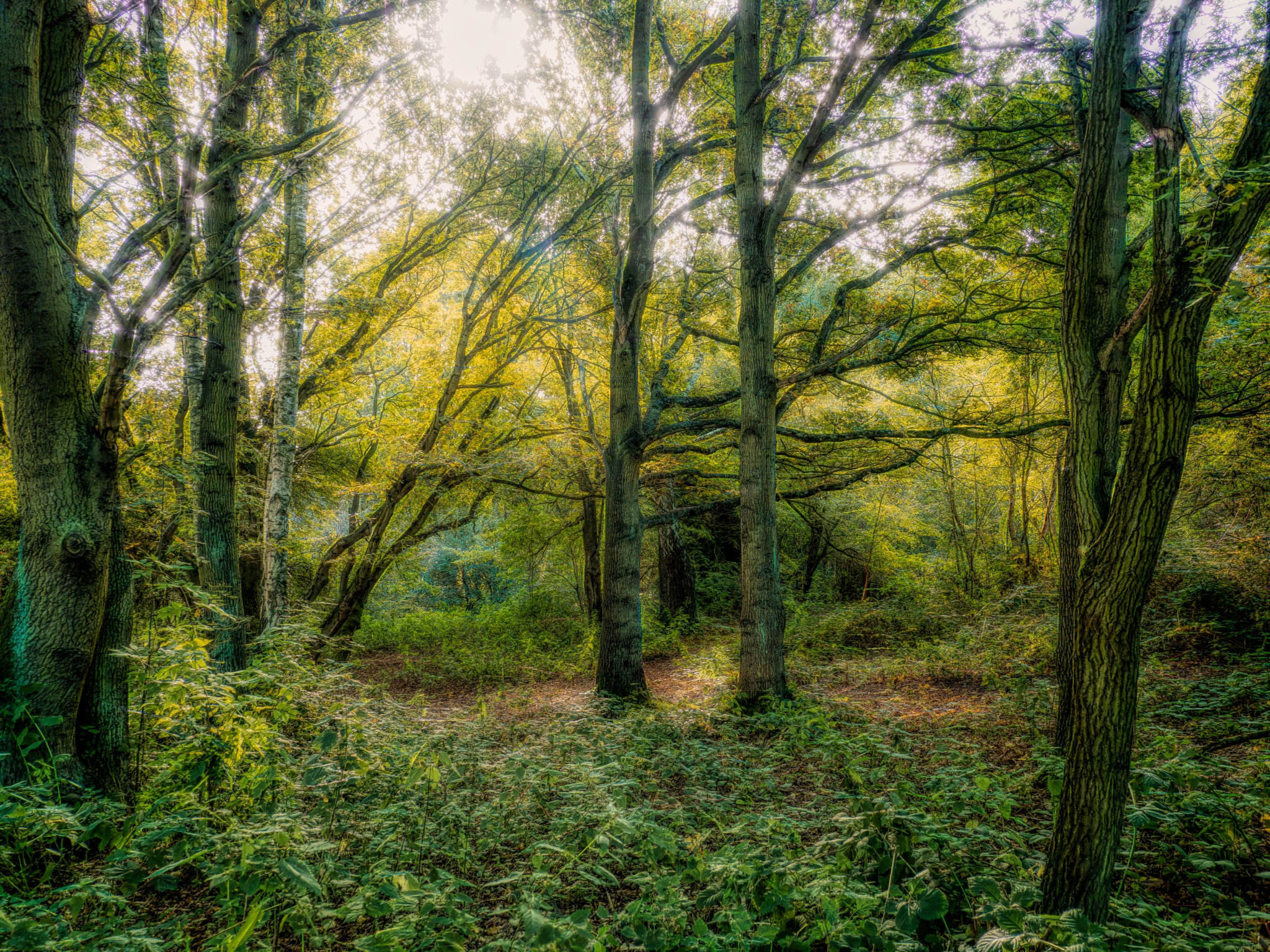 Morning through the trees by Sarah Walters