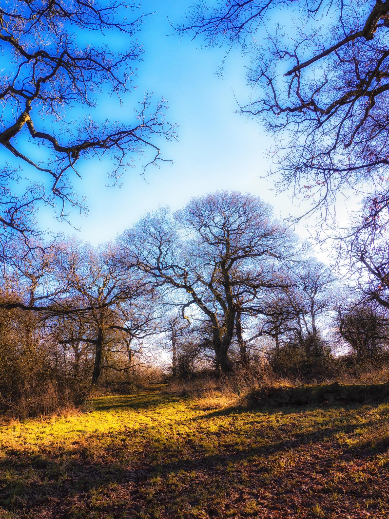 Winter Sun by Sarah Walters