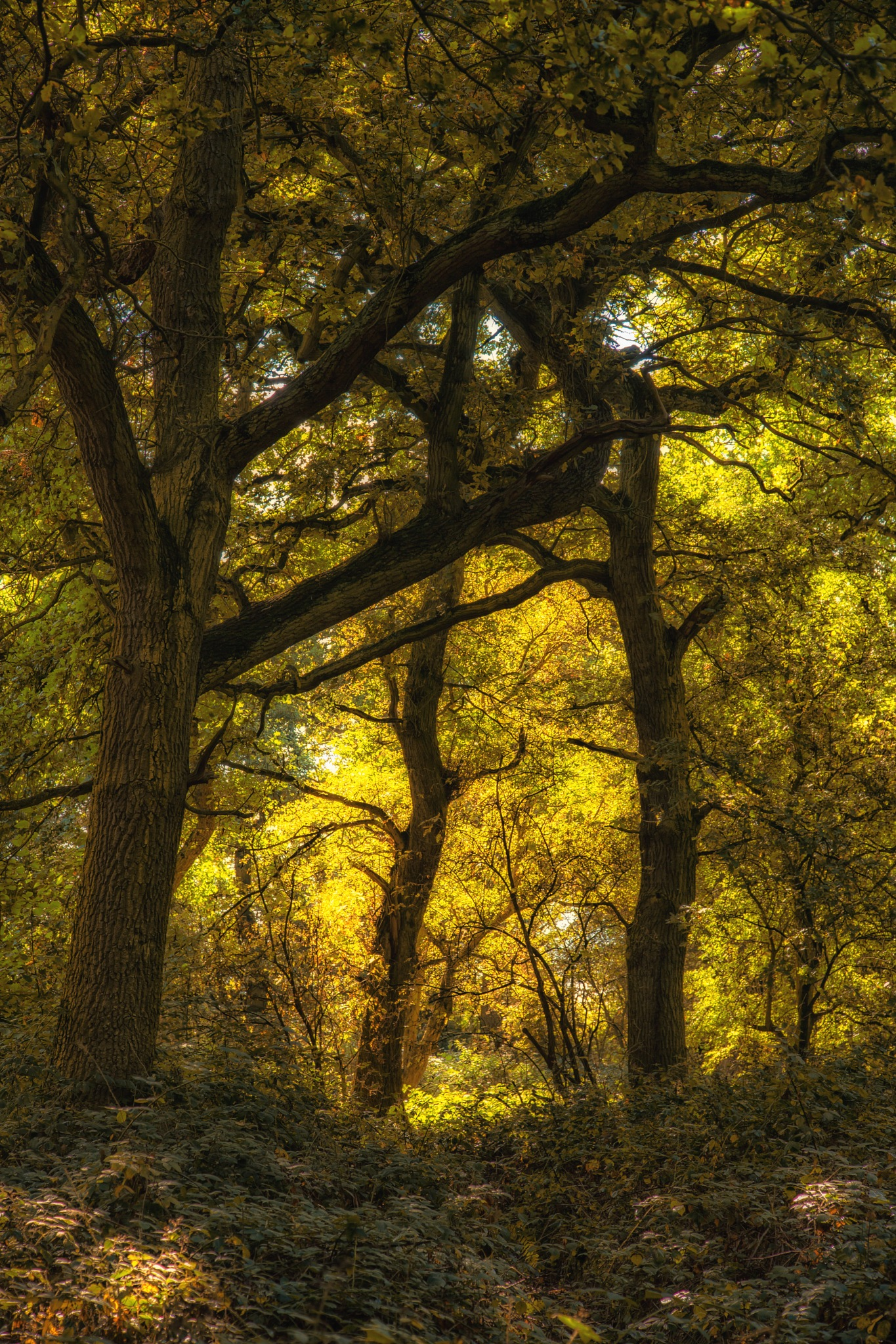 Golden by Sarah Walters