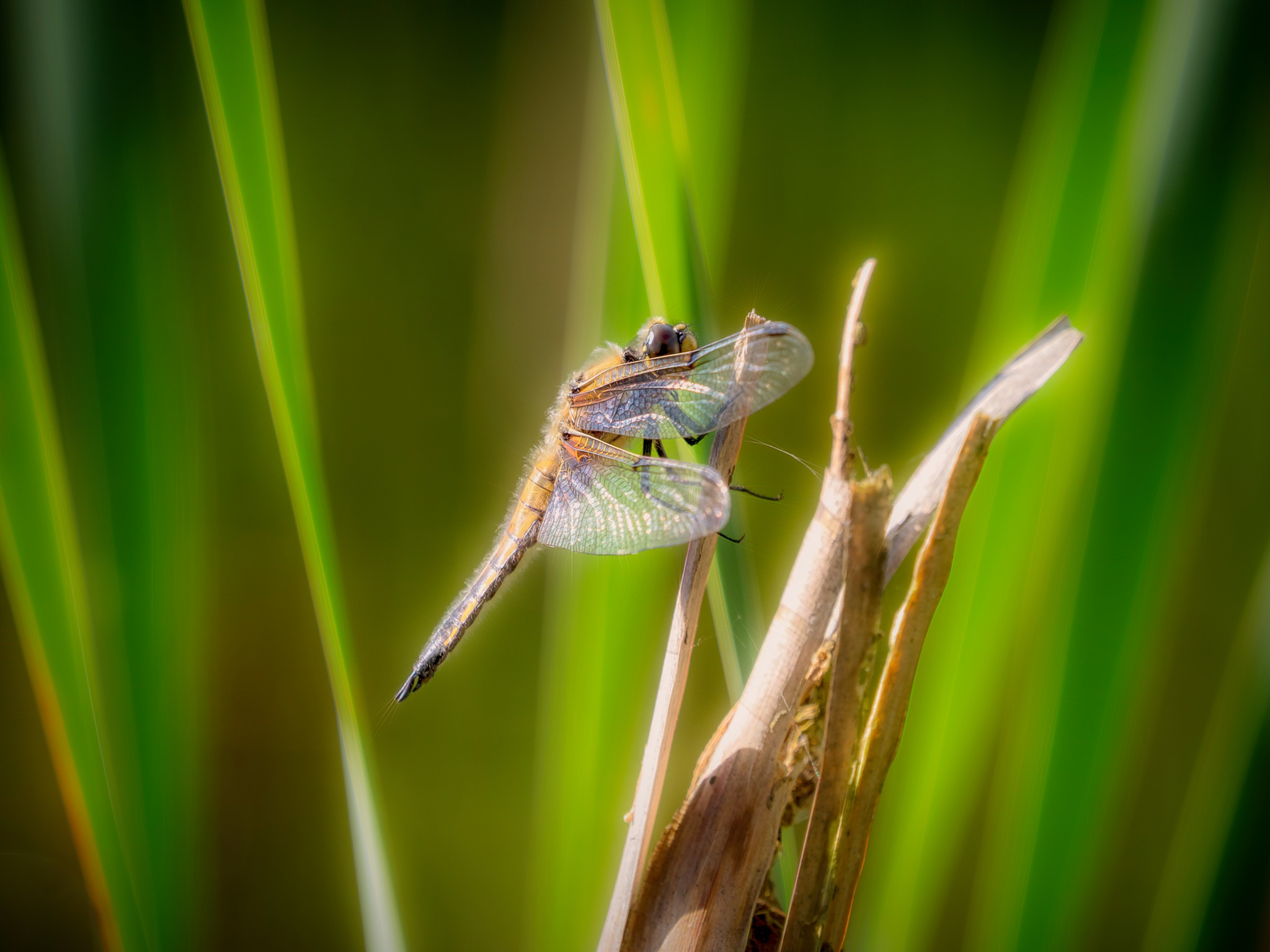 Dragonfly by Sarah Walters