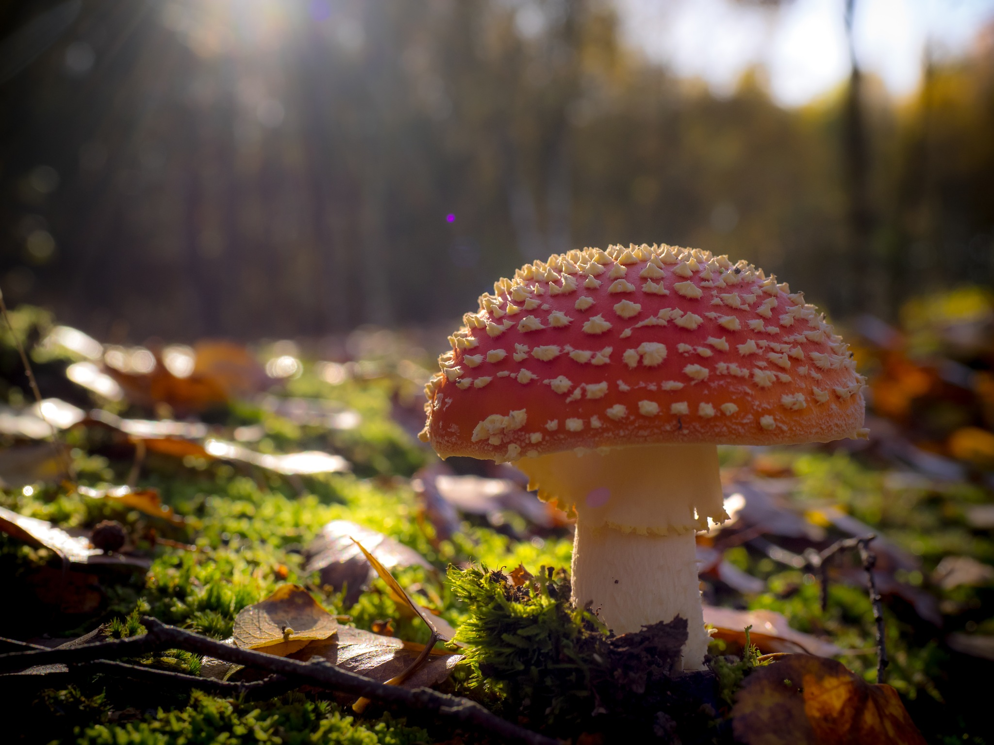 Magical Fungi by Sarah Walters