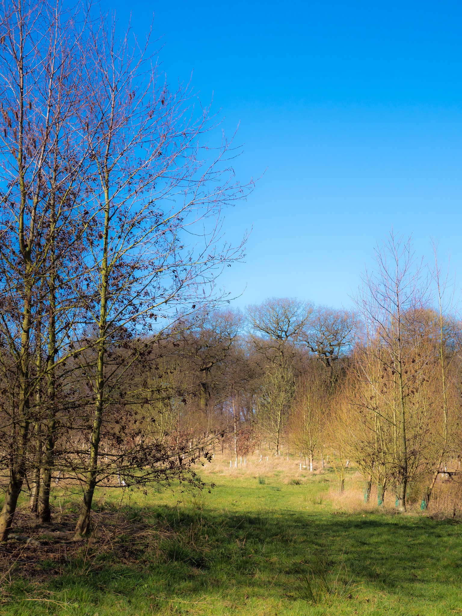 Beautiful Day in Betty's Wood by Sarah Walters