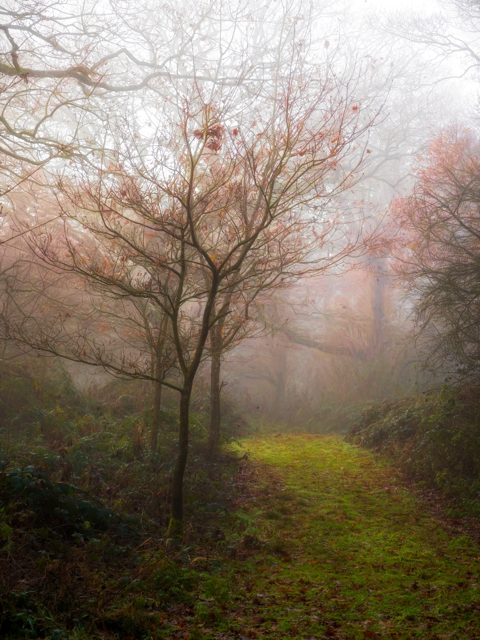 Fog and Gloom by Sarah Walters