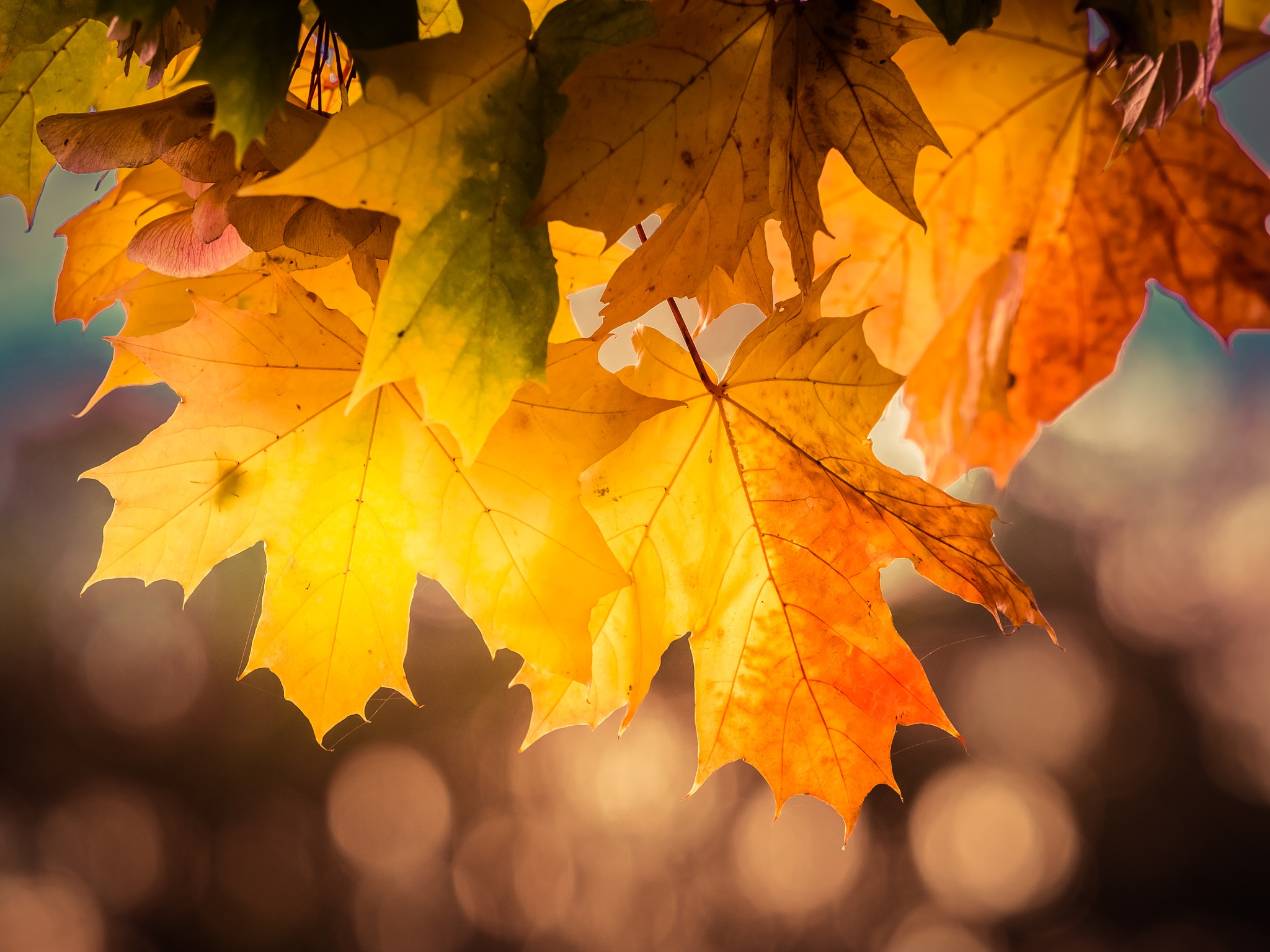 A touch of Autumn by Sarah Walters